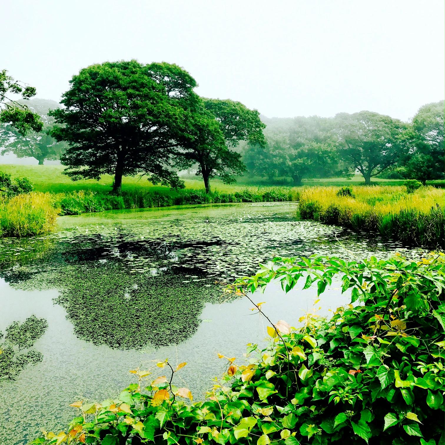 Lily Pond, Chilmark