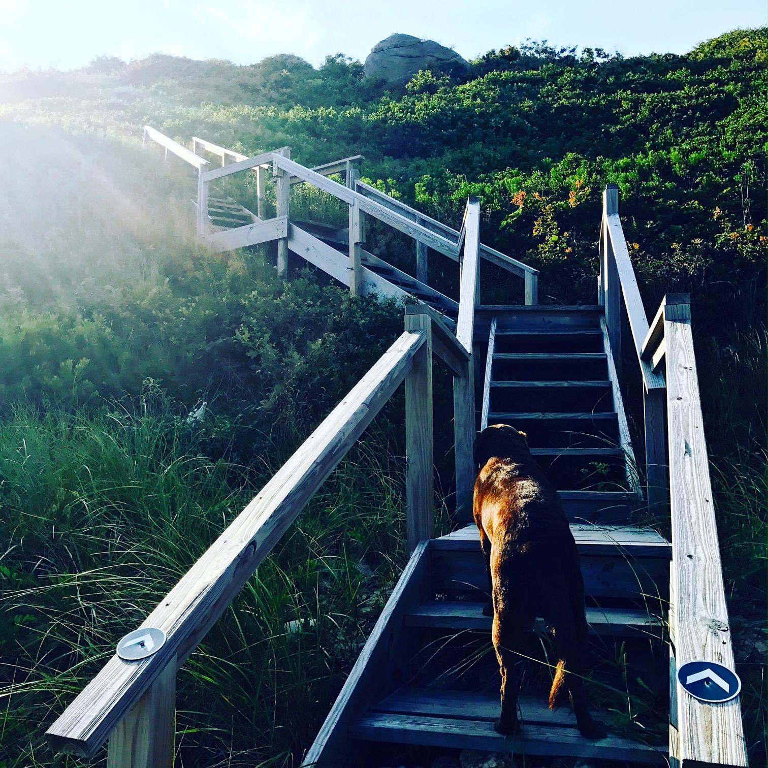 charlie steps.JPG