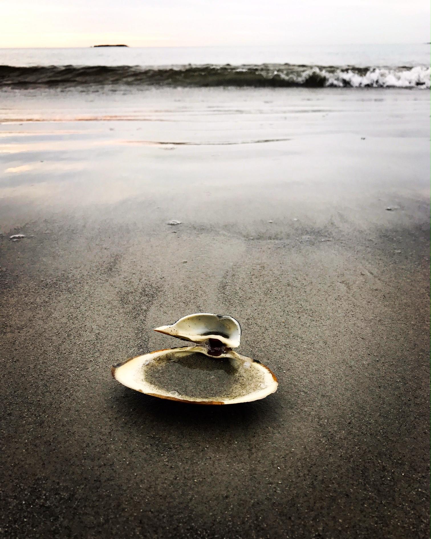 Seashell, Ferry Beach, Saco, Maine