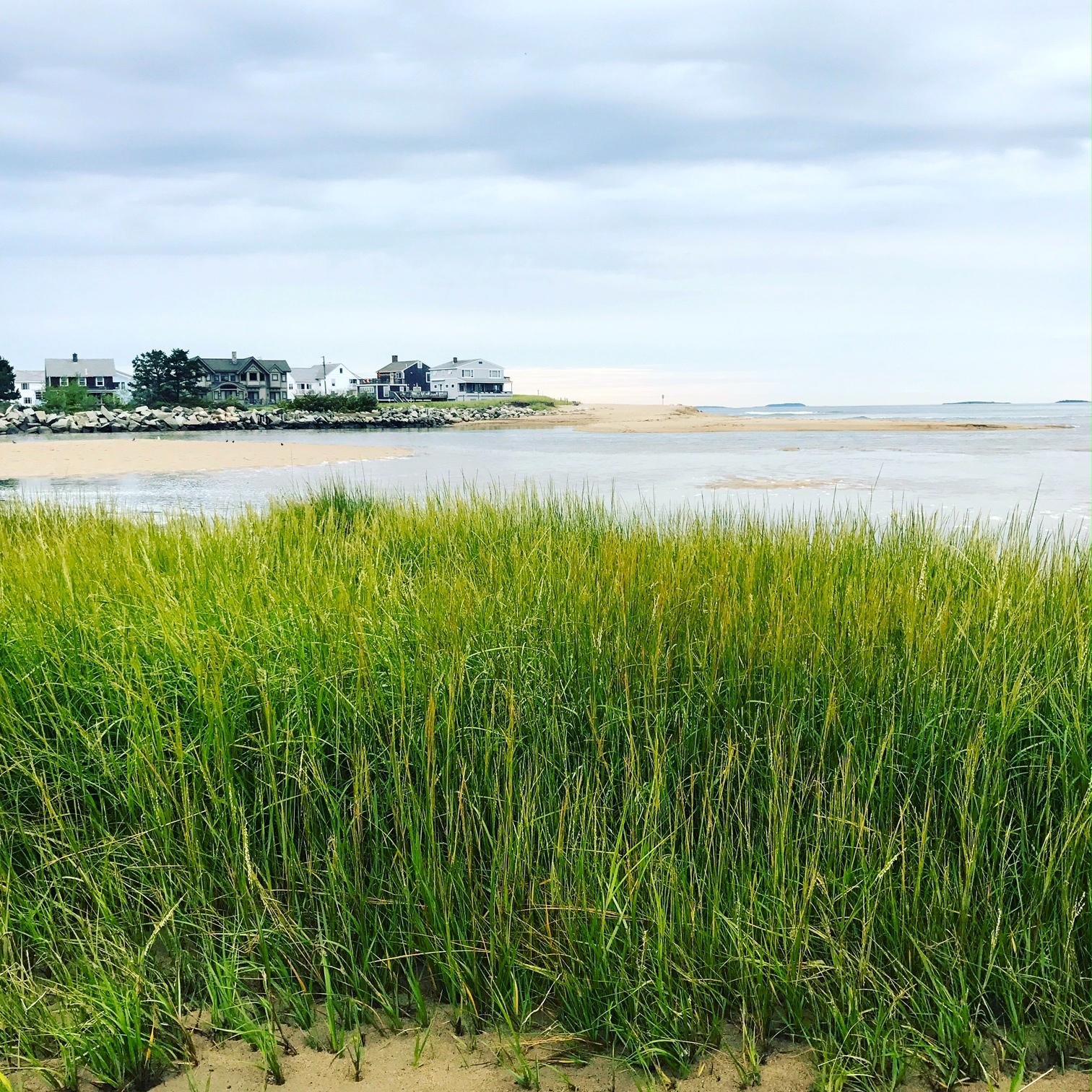 Marsh Grass, Saco, Maine