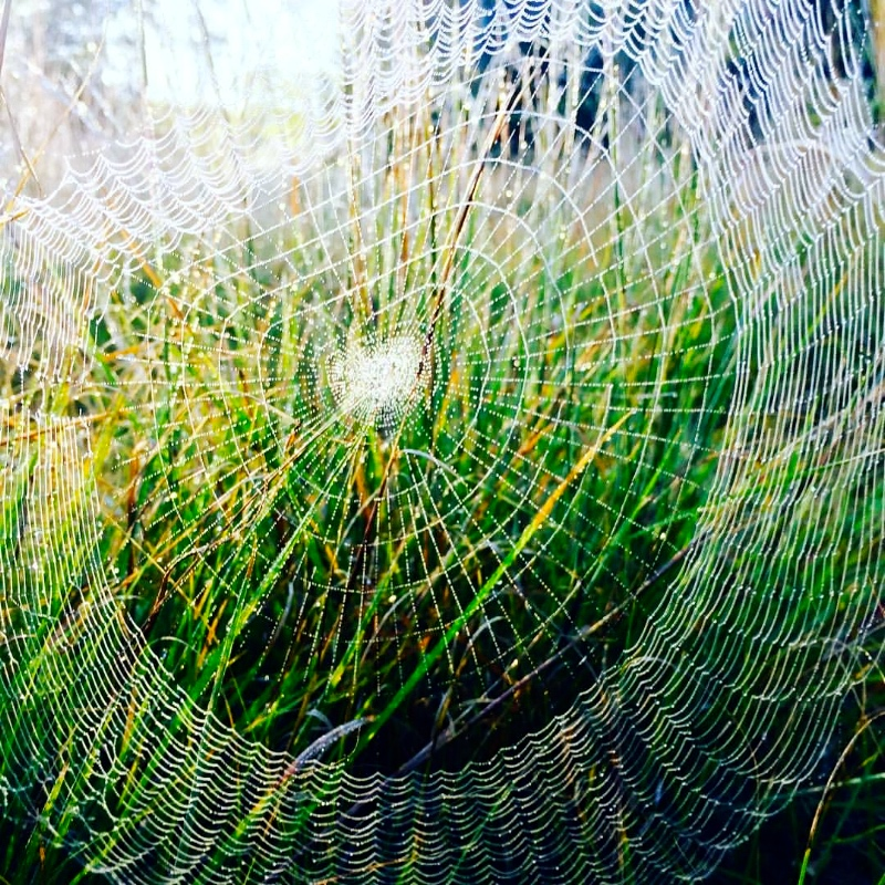 Morning Web, August 23, 2017