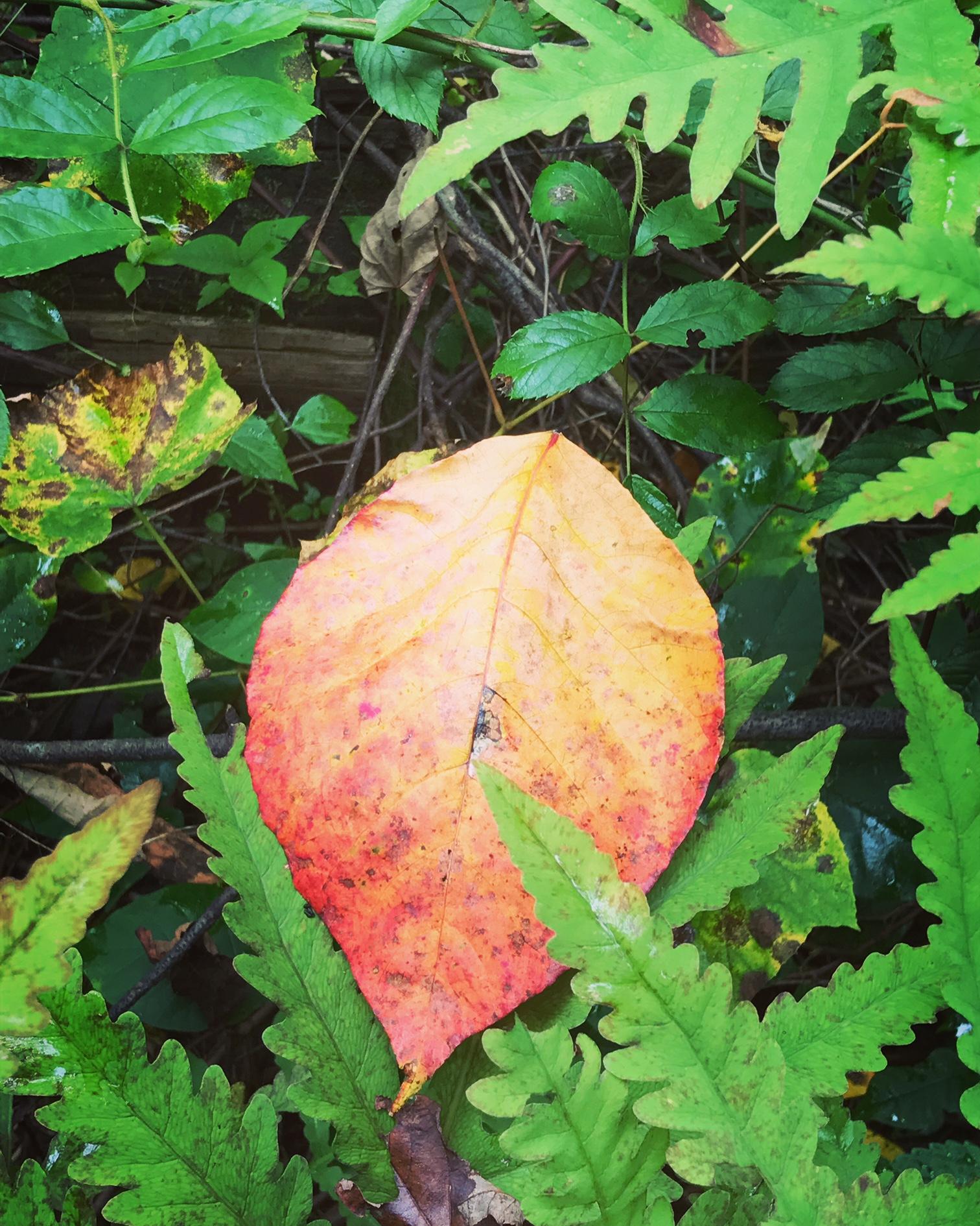 leaf and ferns.JPG