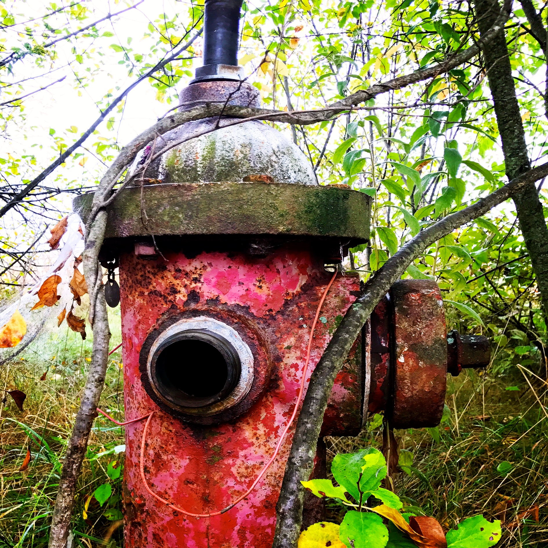 Fire Hydrant in the Meadow