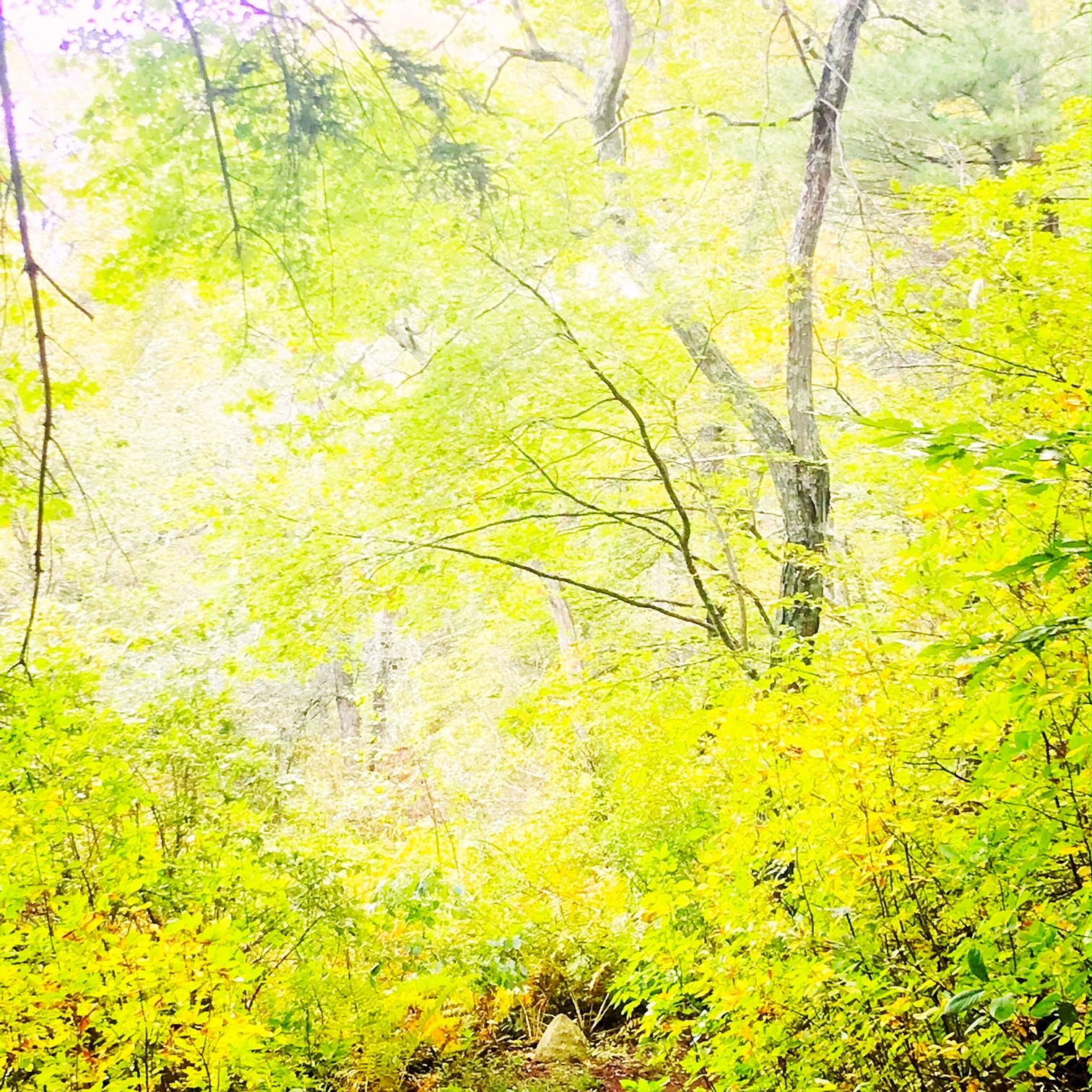forest feelings.JPG