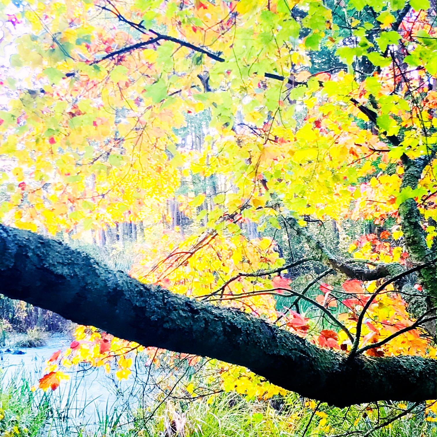 swamp tree.JPG