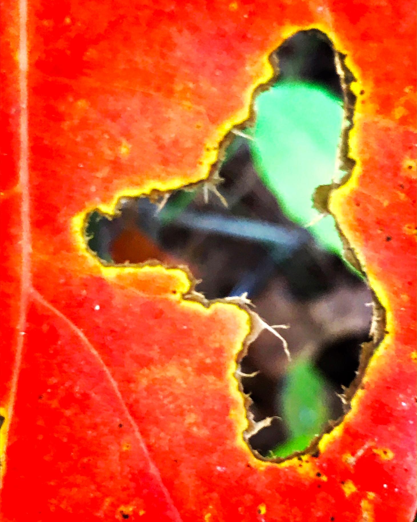 hole in leaf.JPG