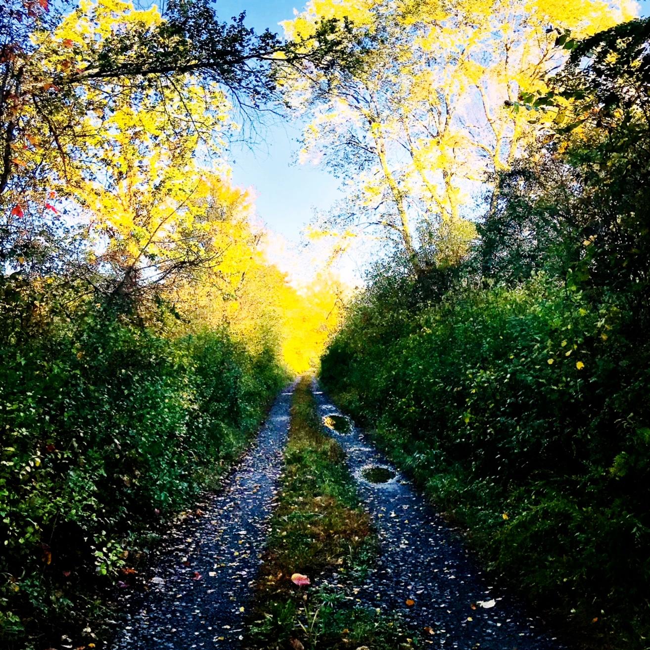 golden lane.JPG