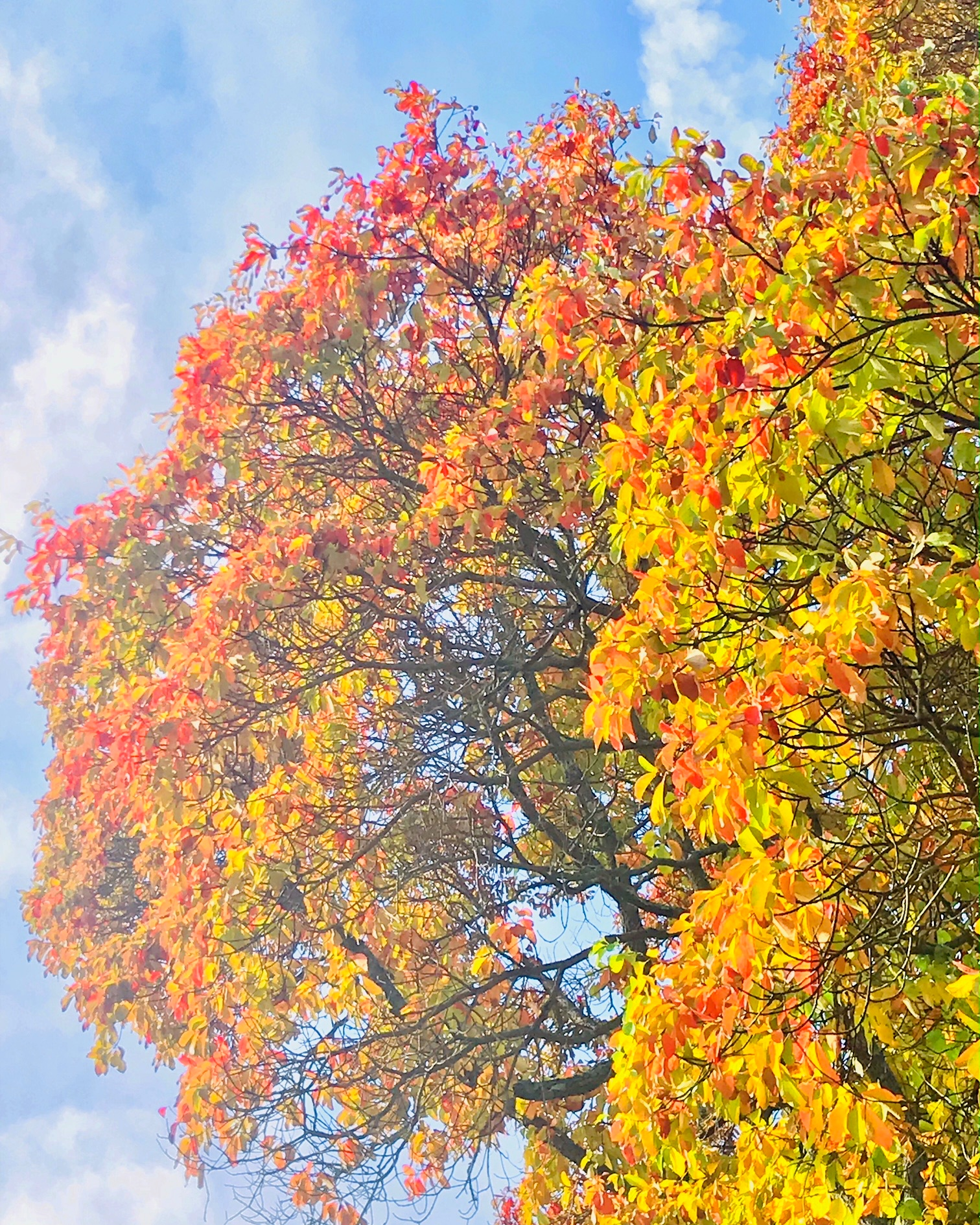 foliage.JPG
