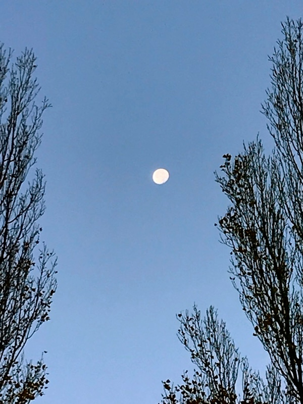 Truchas, Morning Moon and Aspens