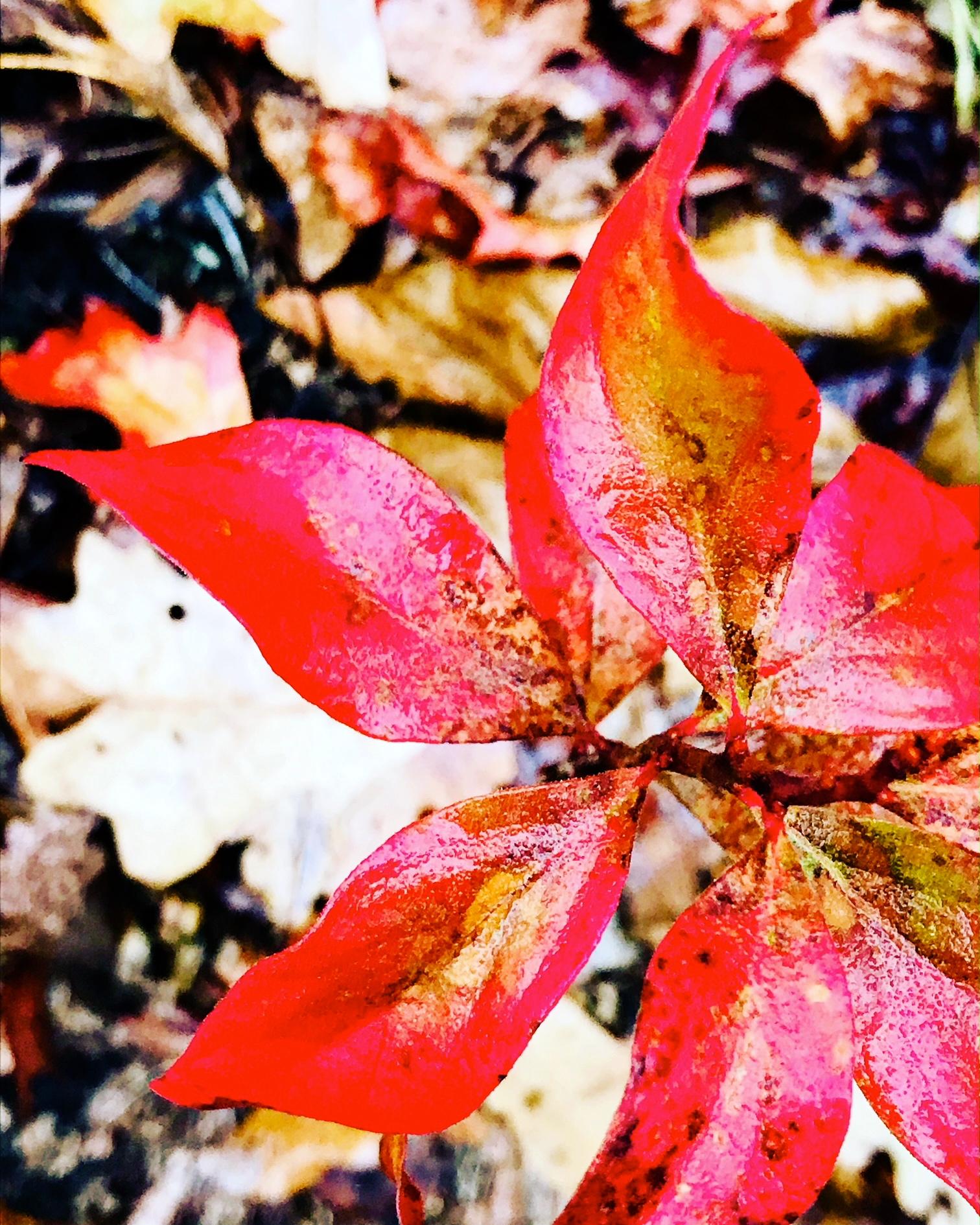 Leaves like a pinwheel