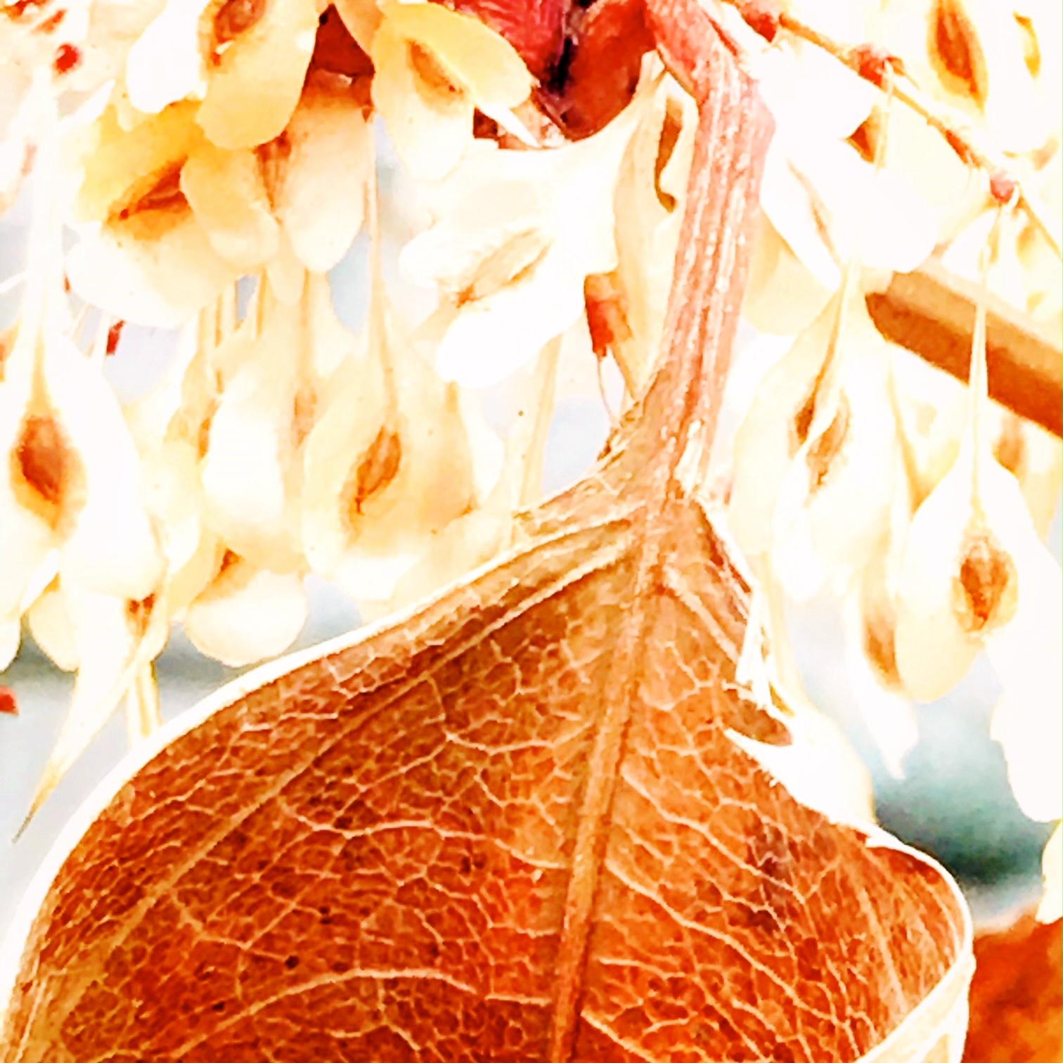 leaf 2.JPG