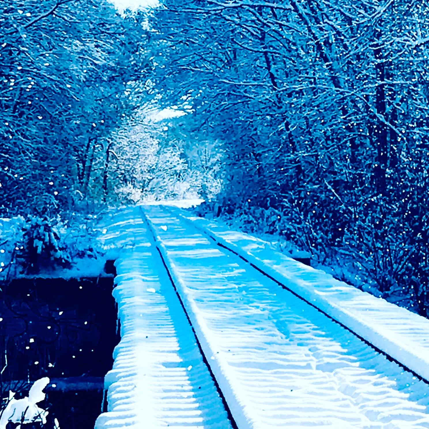 tracks in snow.JPG