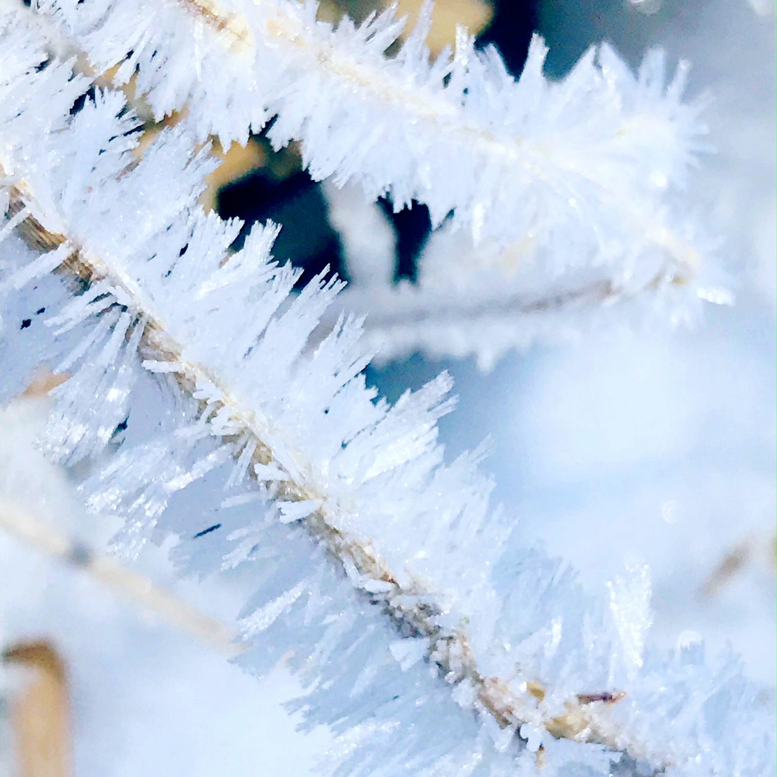 ice branch.JPG