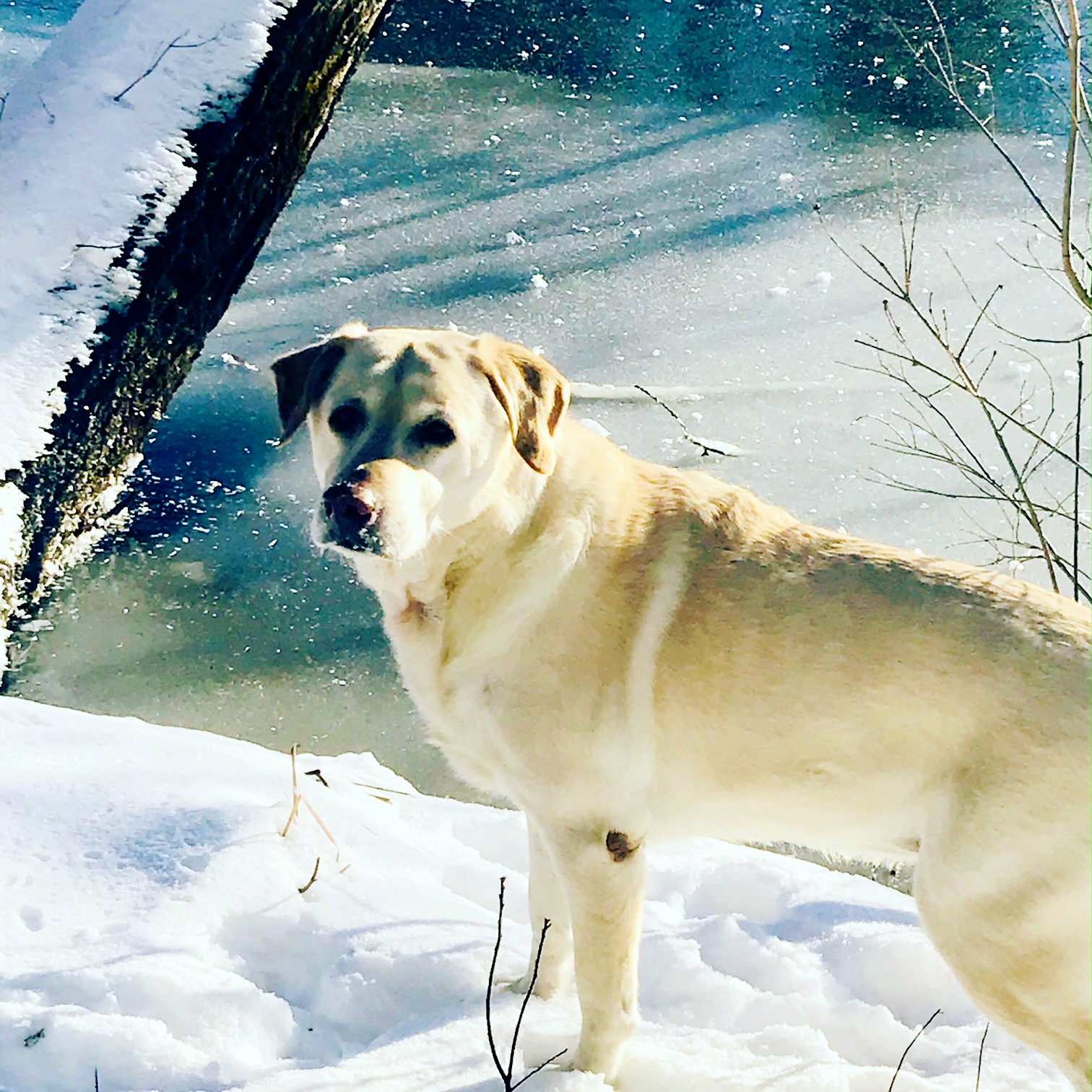 Suzi at the river