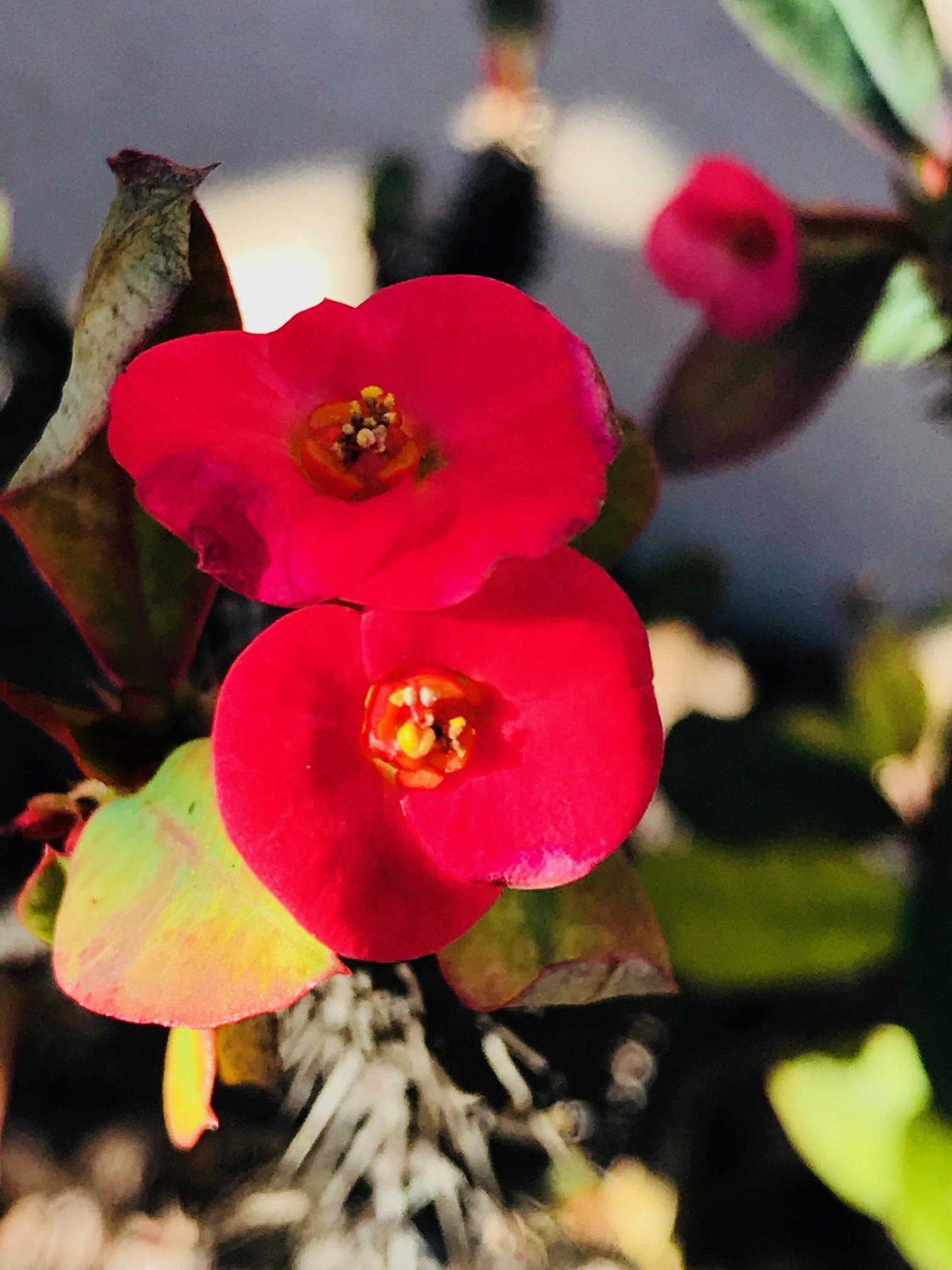 red flower tampa.jpg