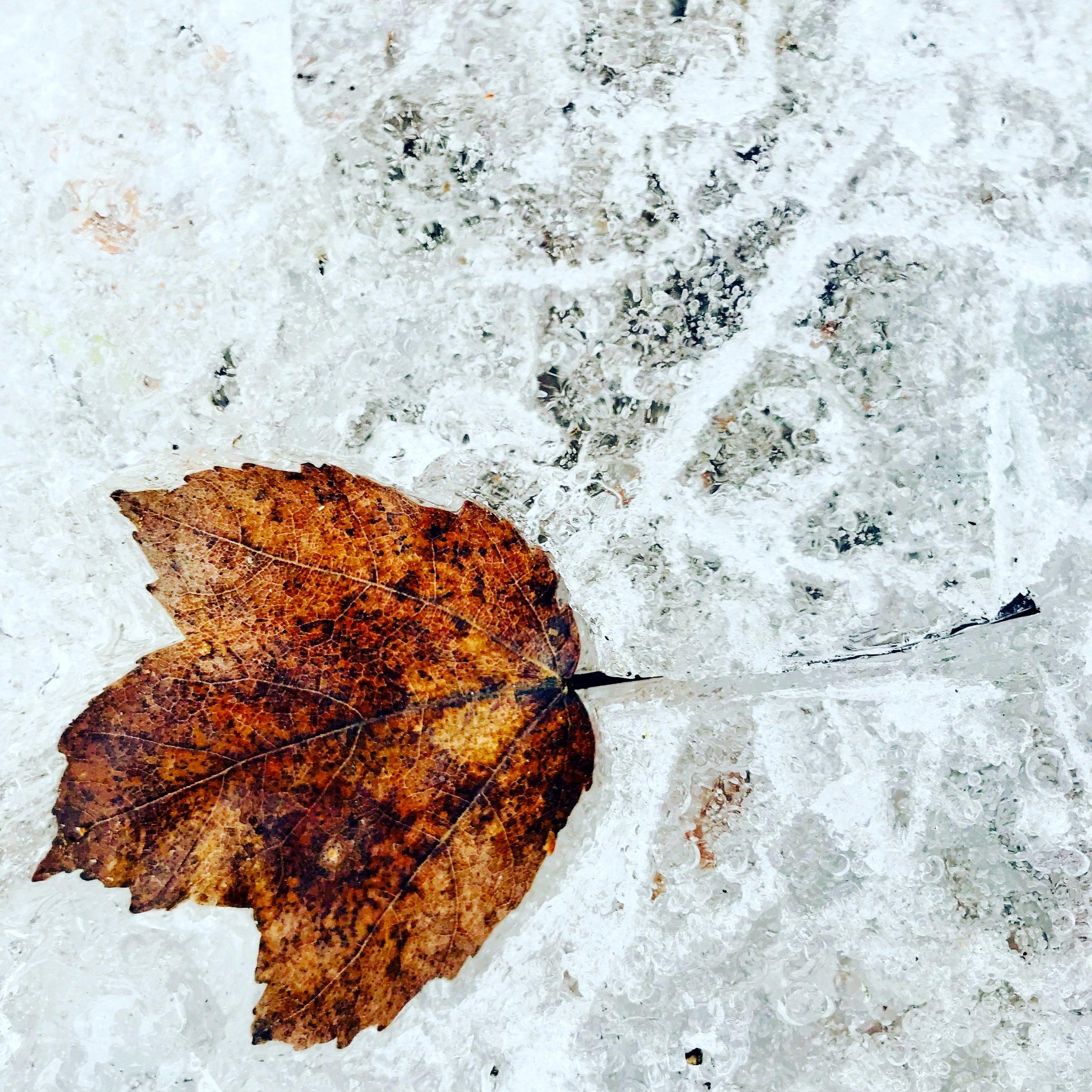 frozen leaf.JPG