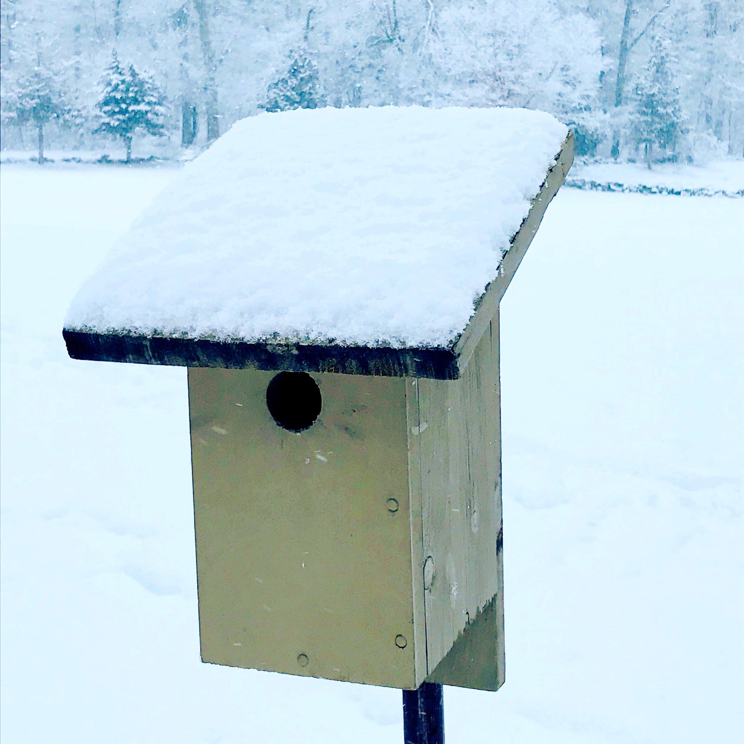 birdhouse in snow.JPG