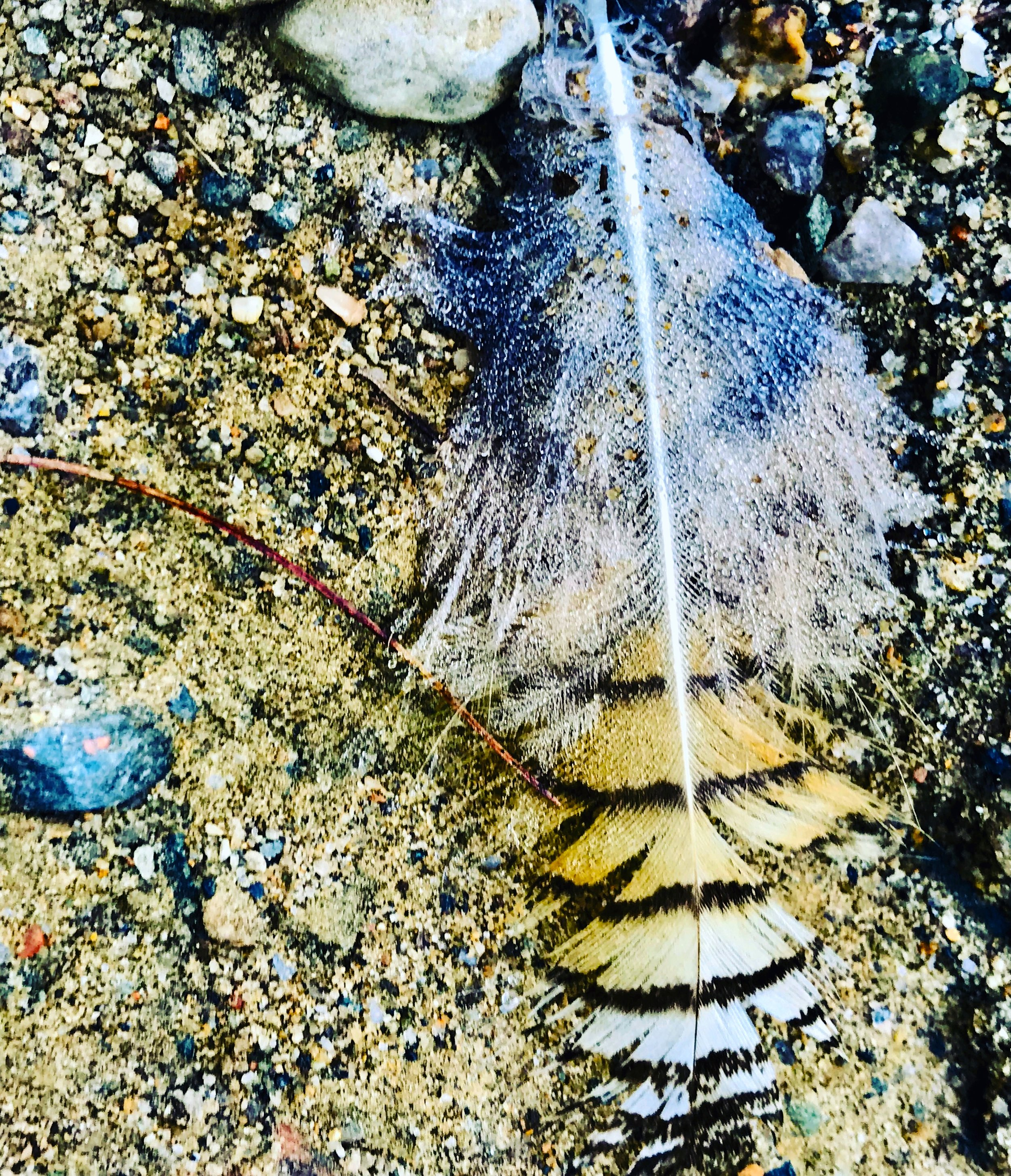 Feather on the gravel hill