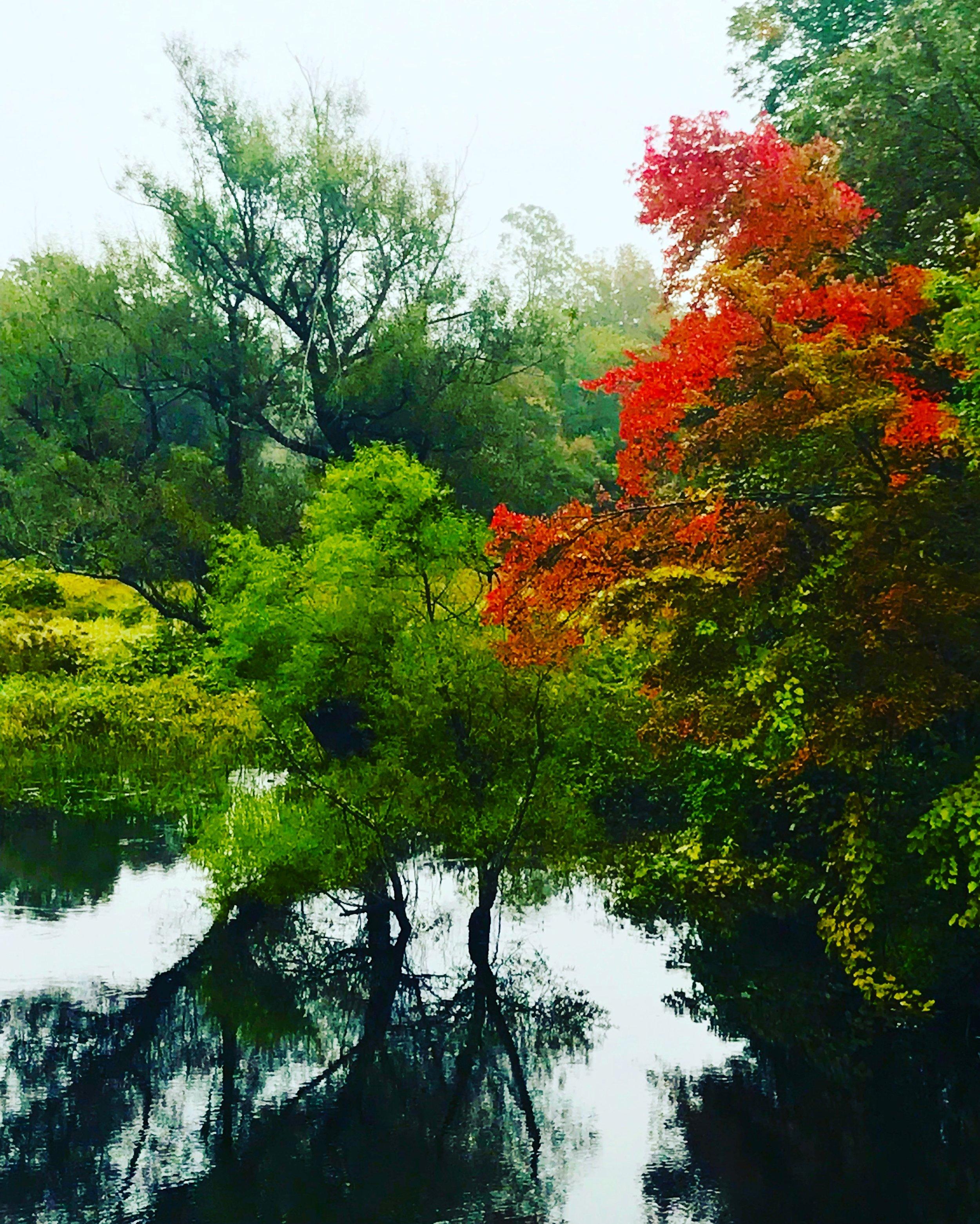 Charles River morning view