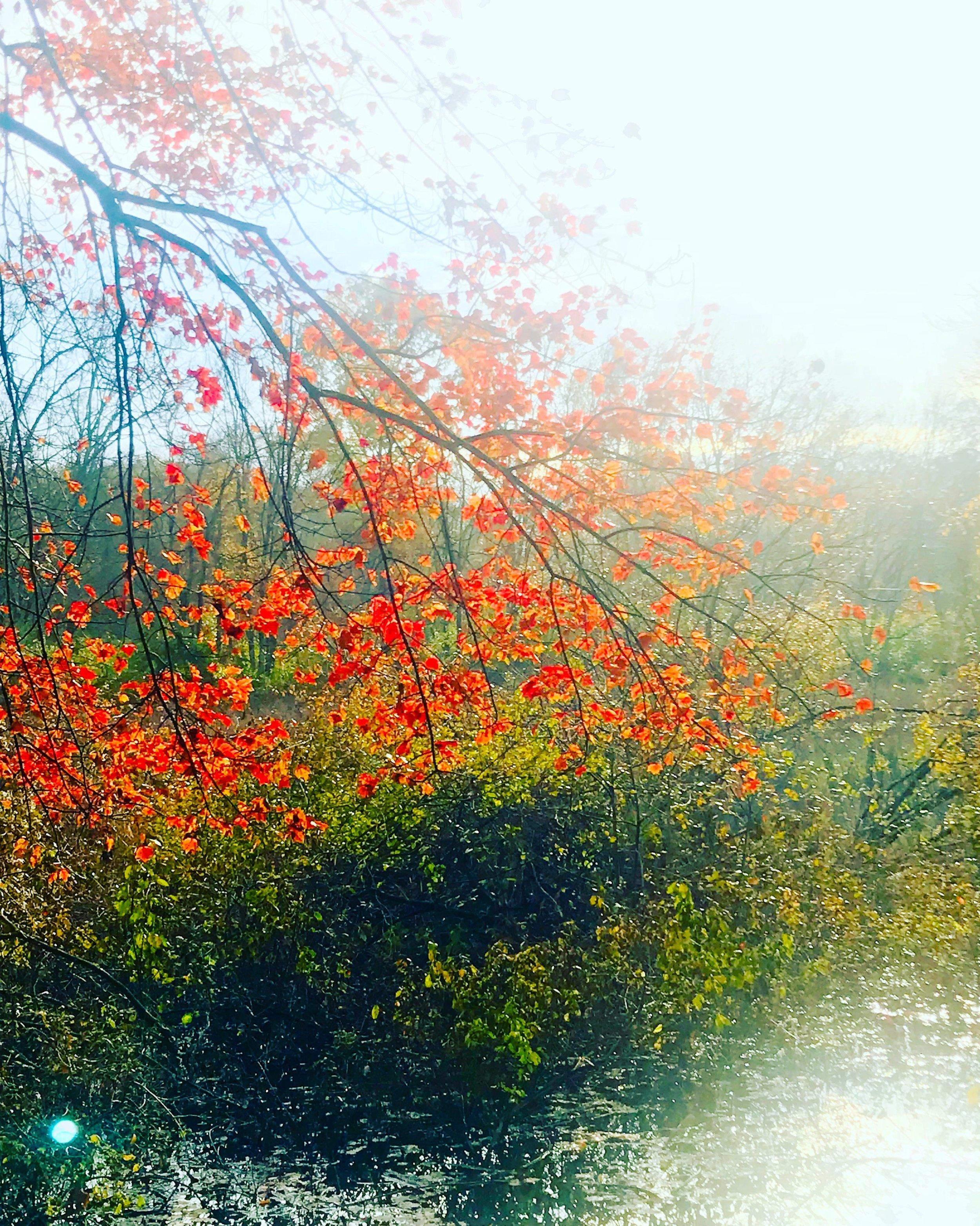 Red River Branch