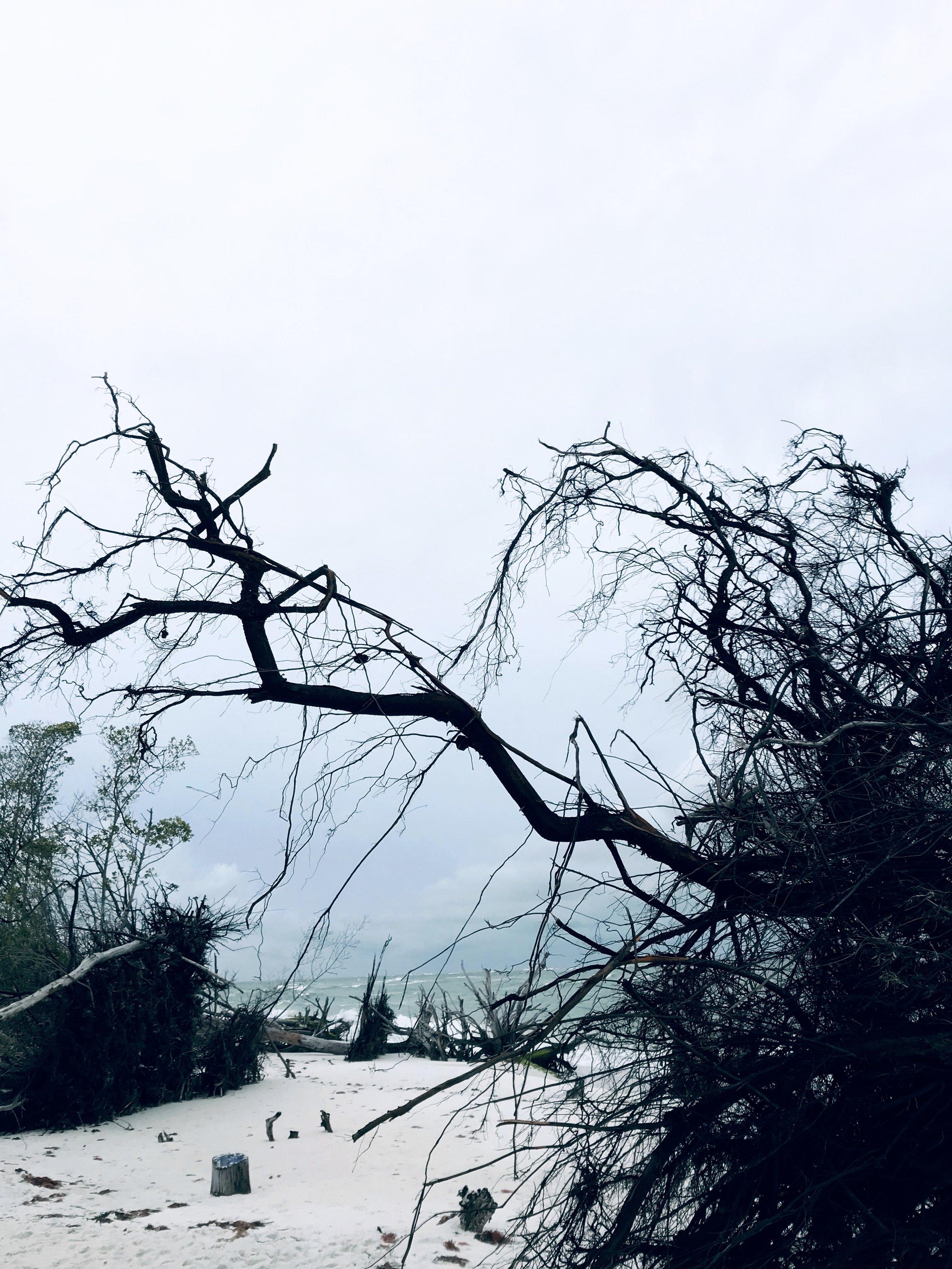 storm branch.jpg