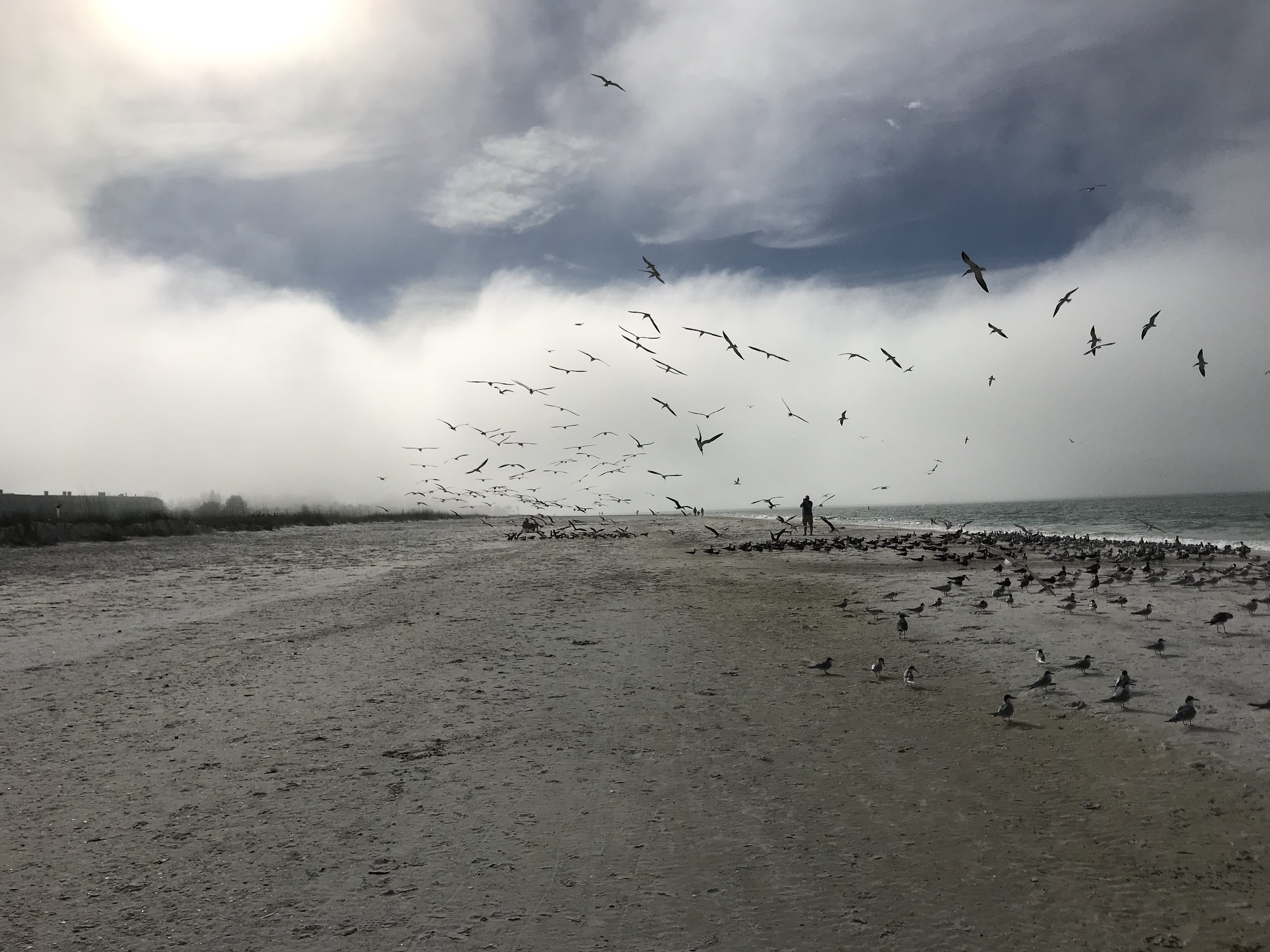 beach cloud birds.jpg