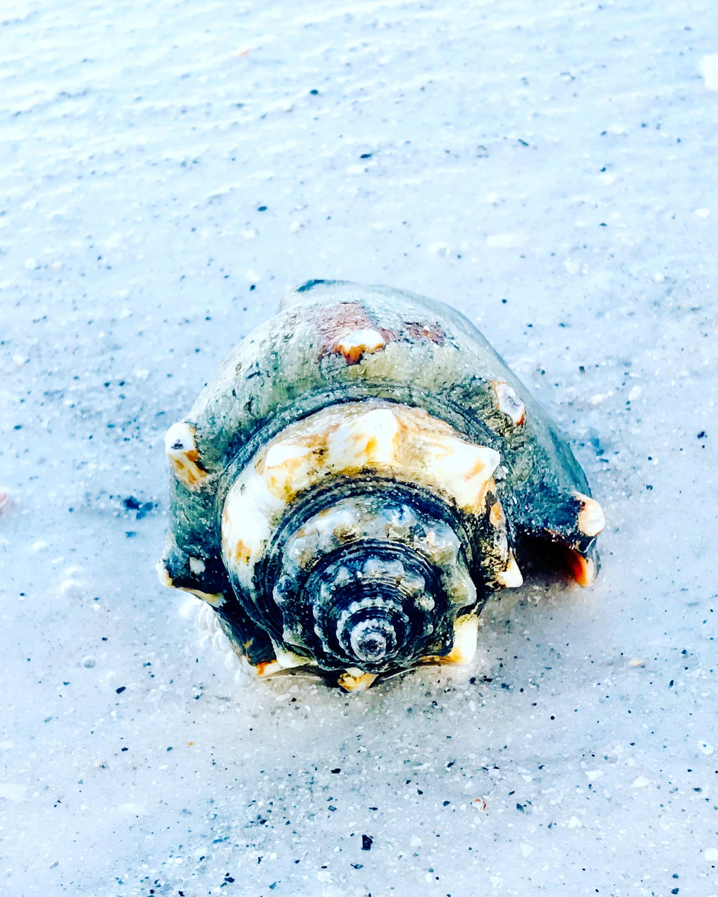 old shell.JPG