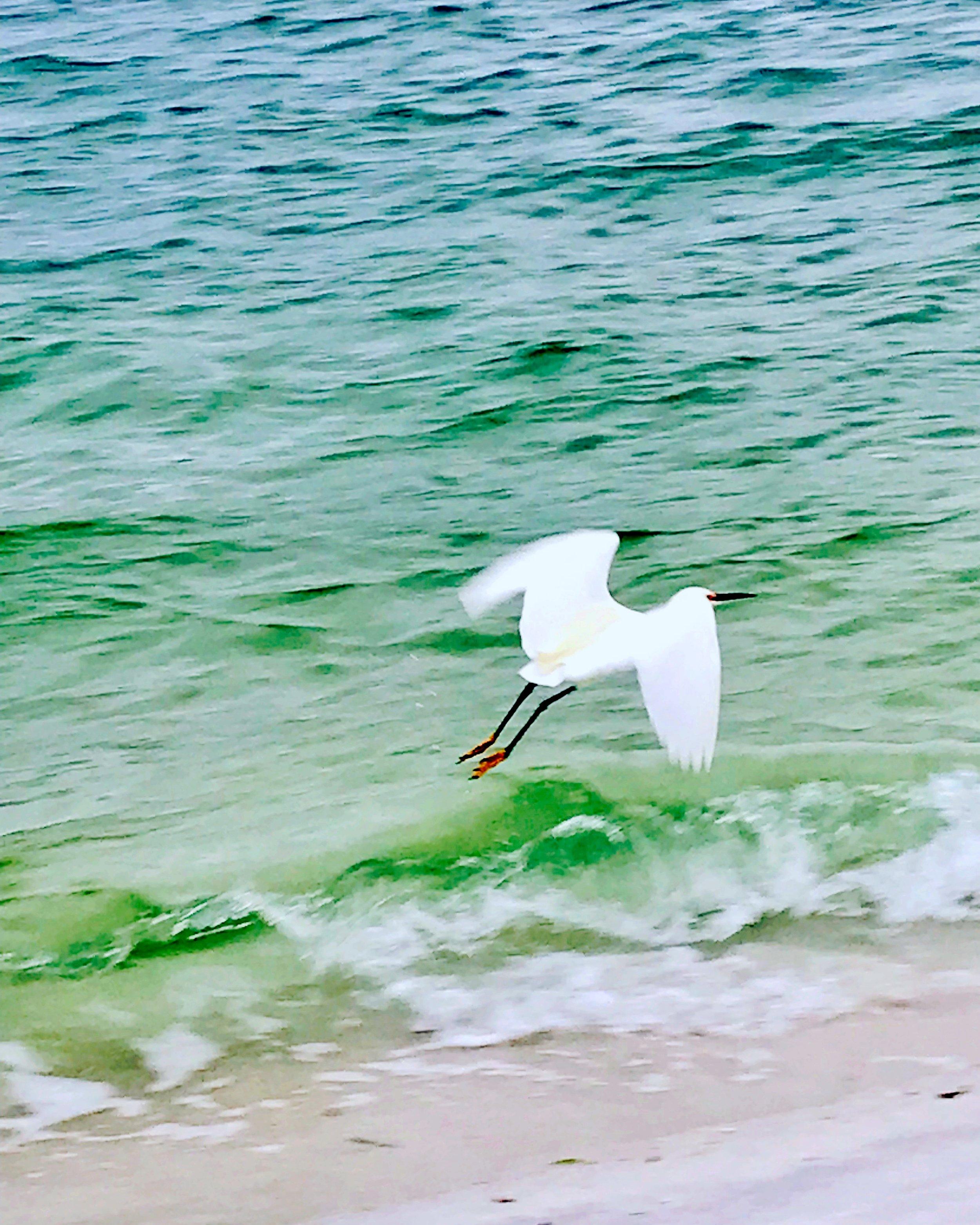ibis flight.JPG