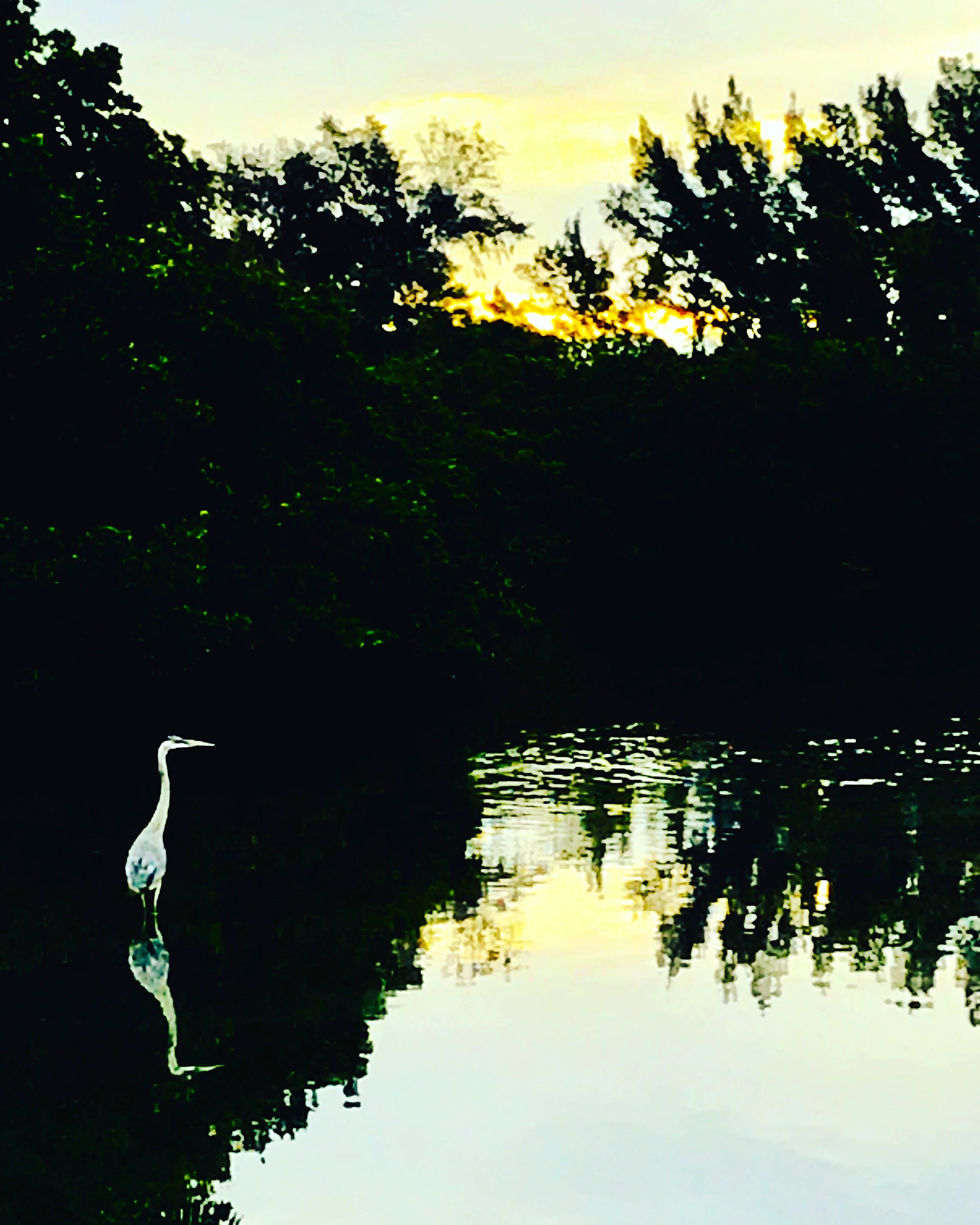 heron lagoon.JPG