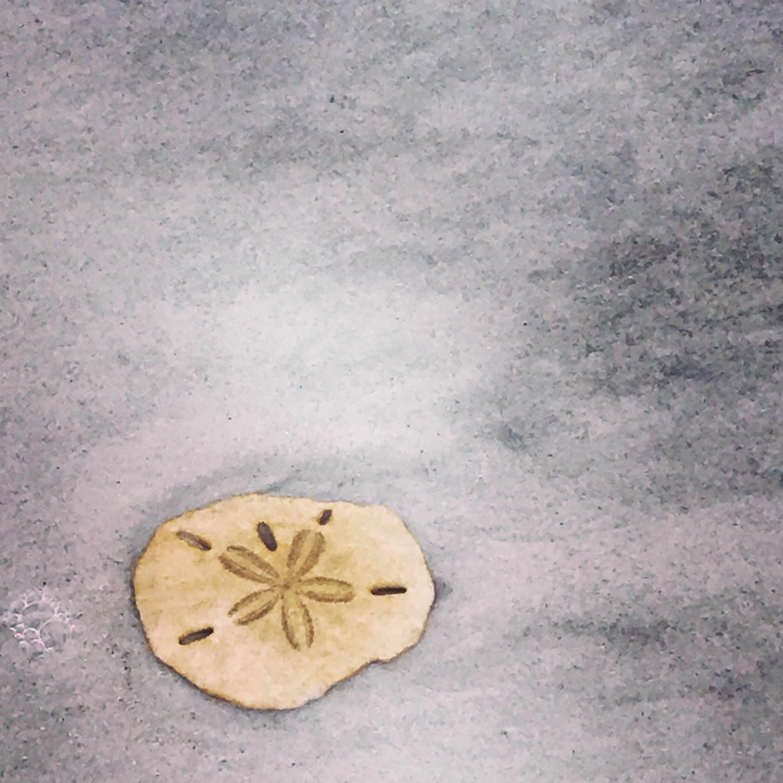sand dollar wish.JPG