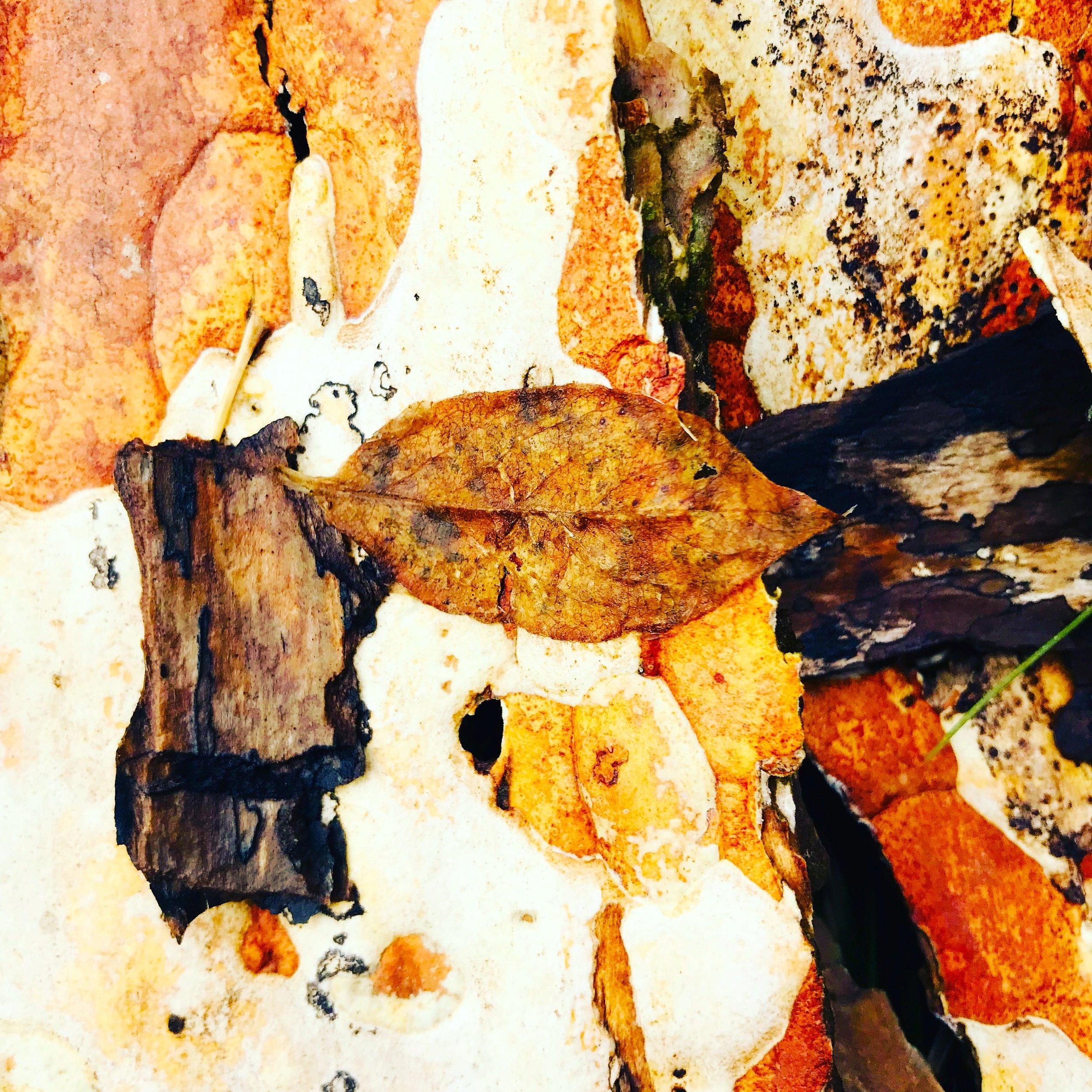 Tree bark near the swamp