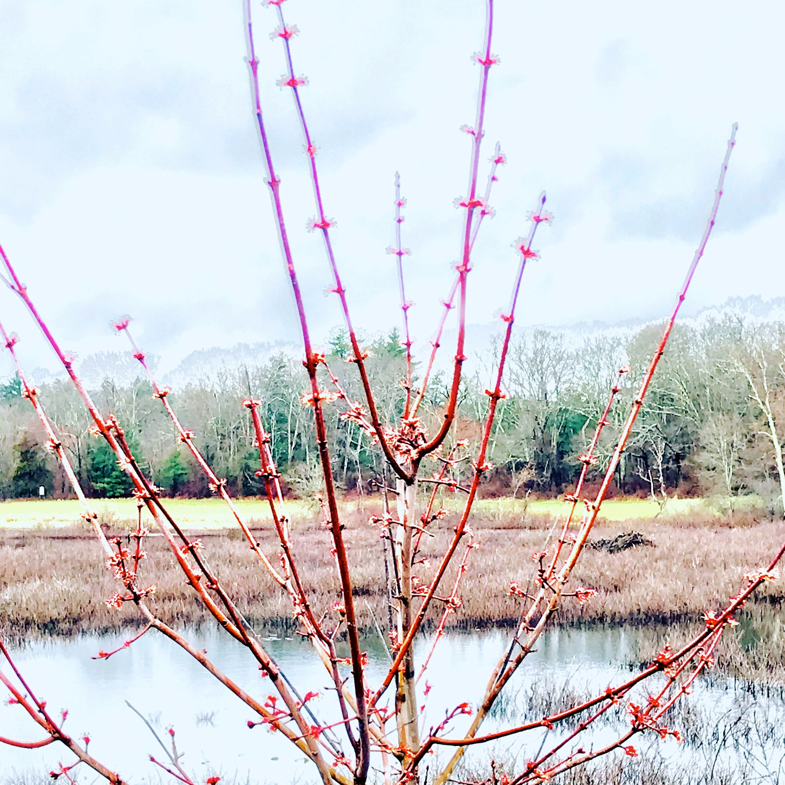 Spring Wetlands, Charles River