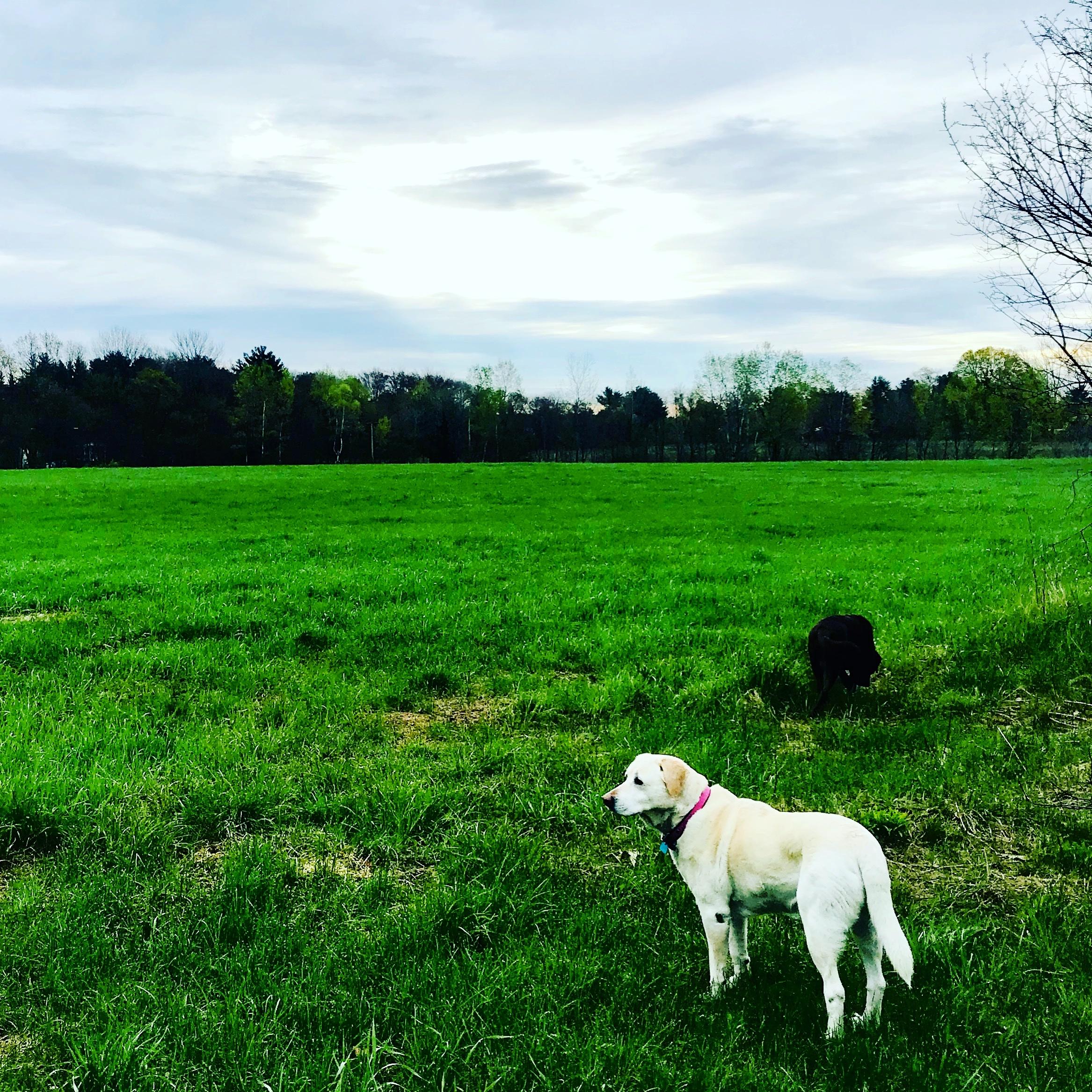 suzi in the meadow.JPG