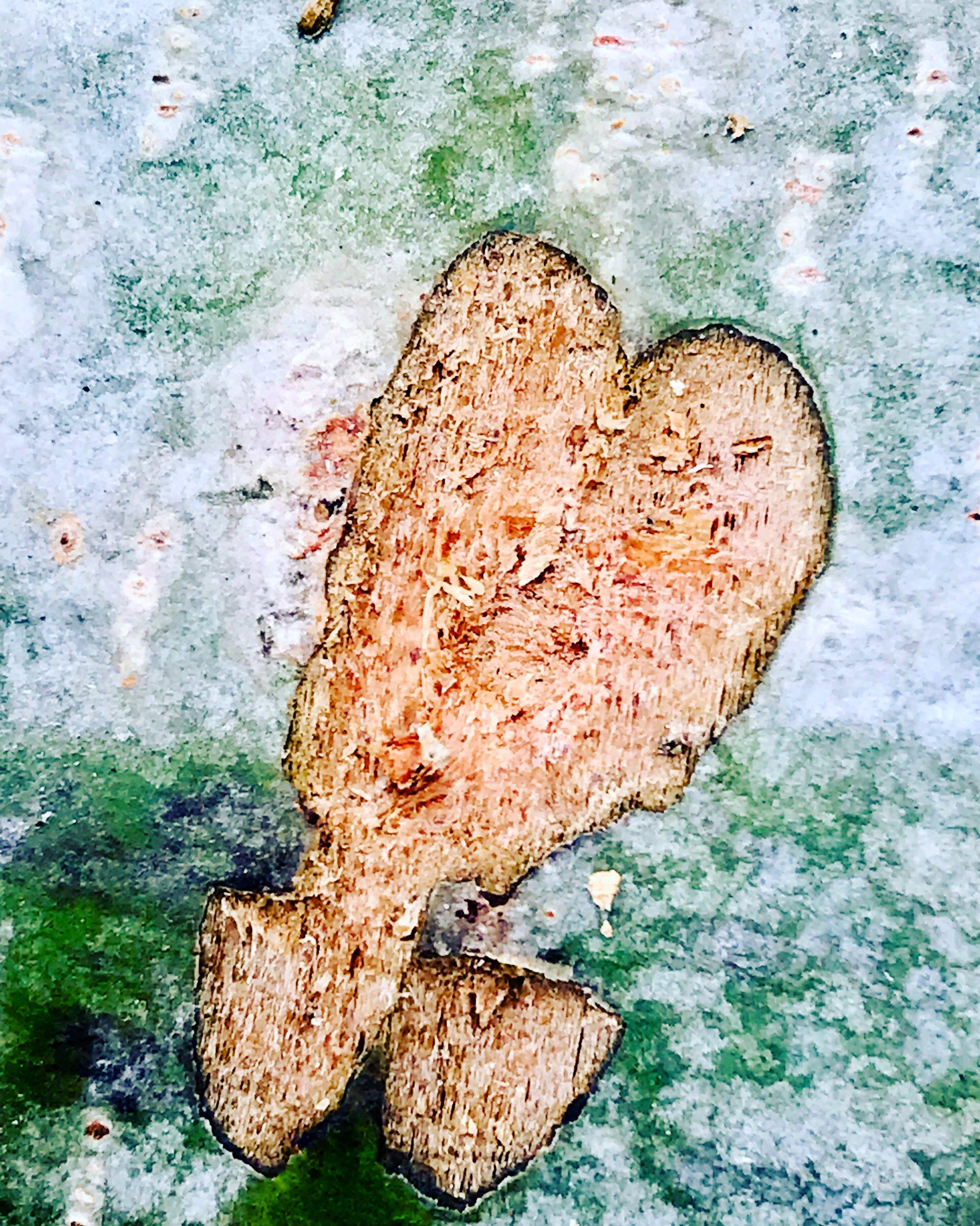 Tree bark eart