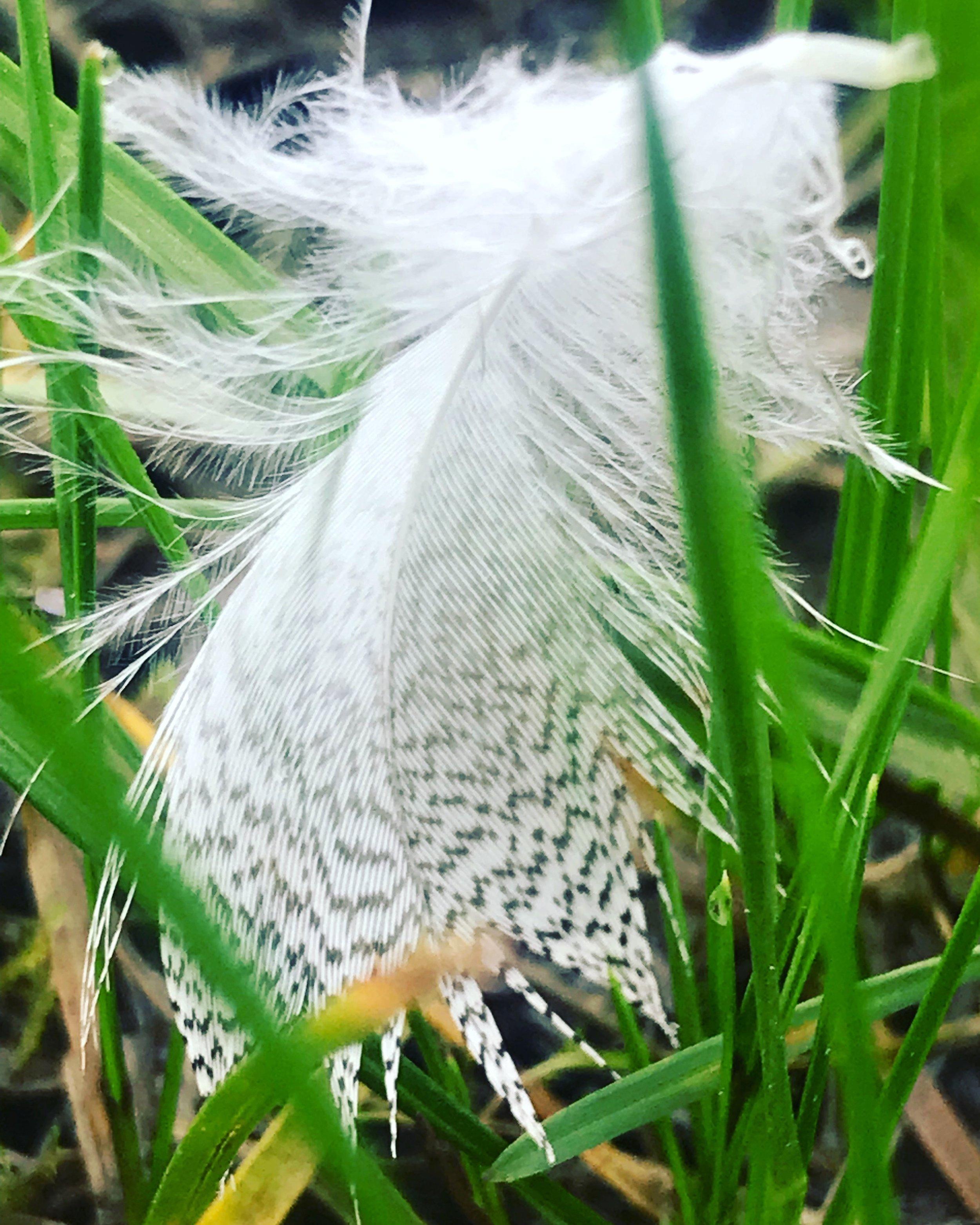 feather meadow.JPG