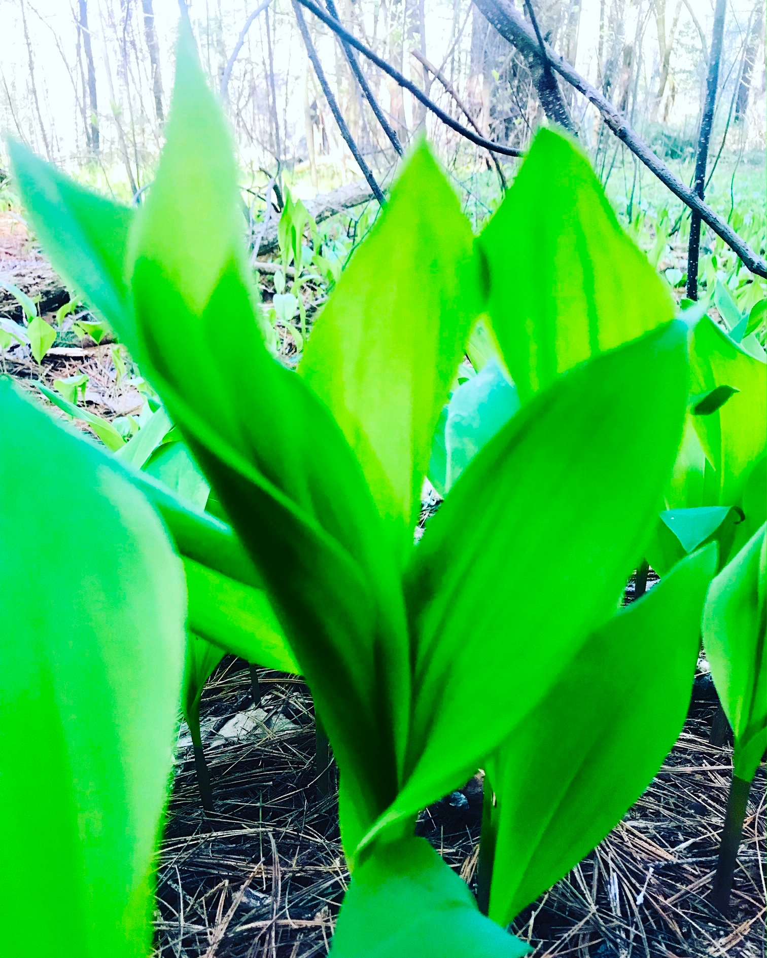 Lily of the Valley patch
