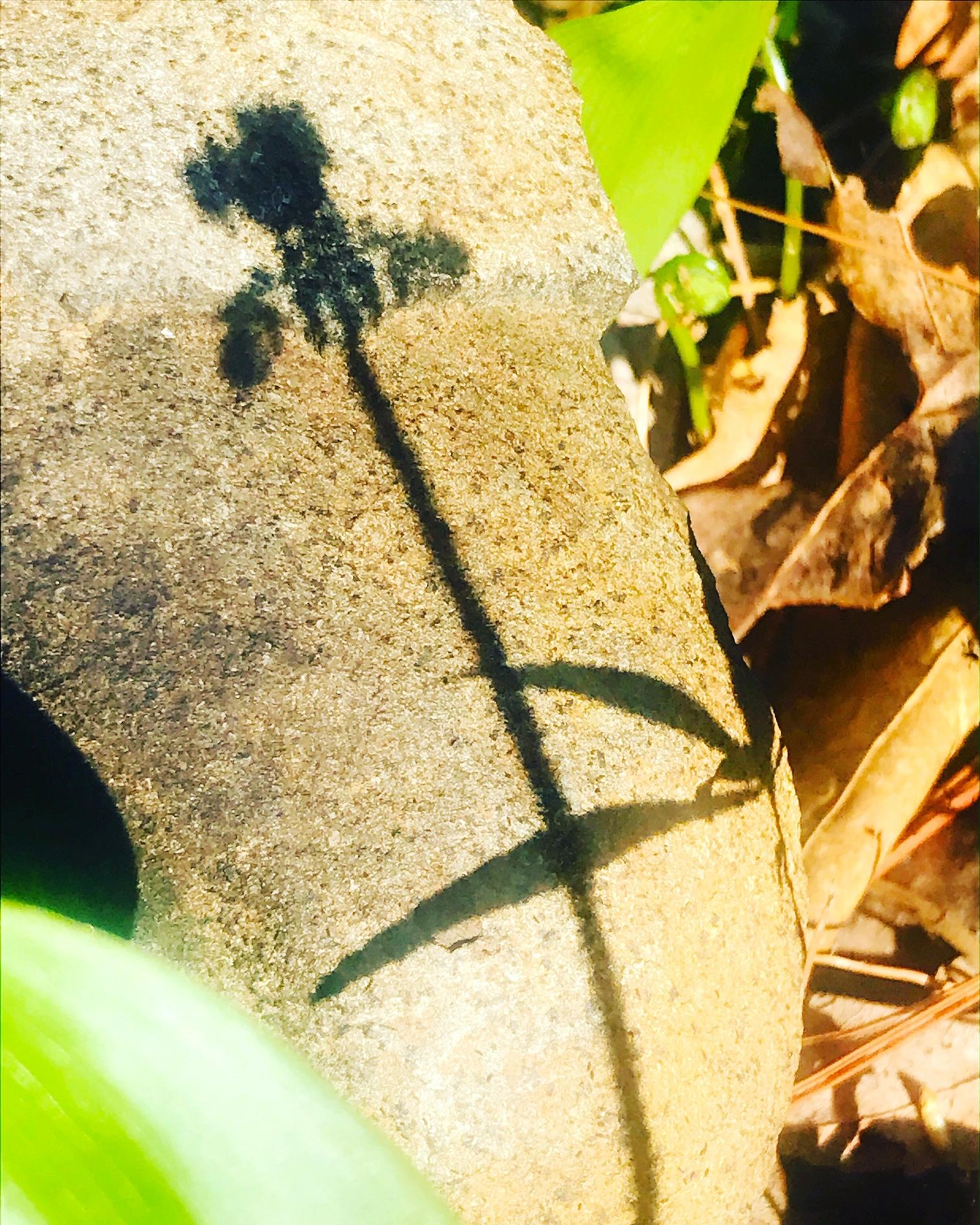 fernshadow.JPG