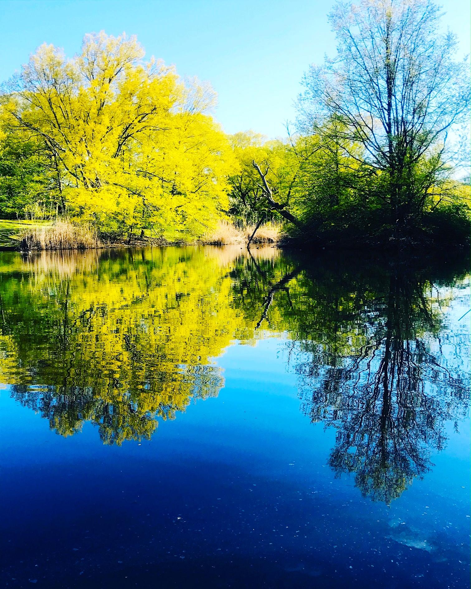 Muddy River, Riverway, Brookline, MA