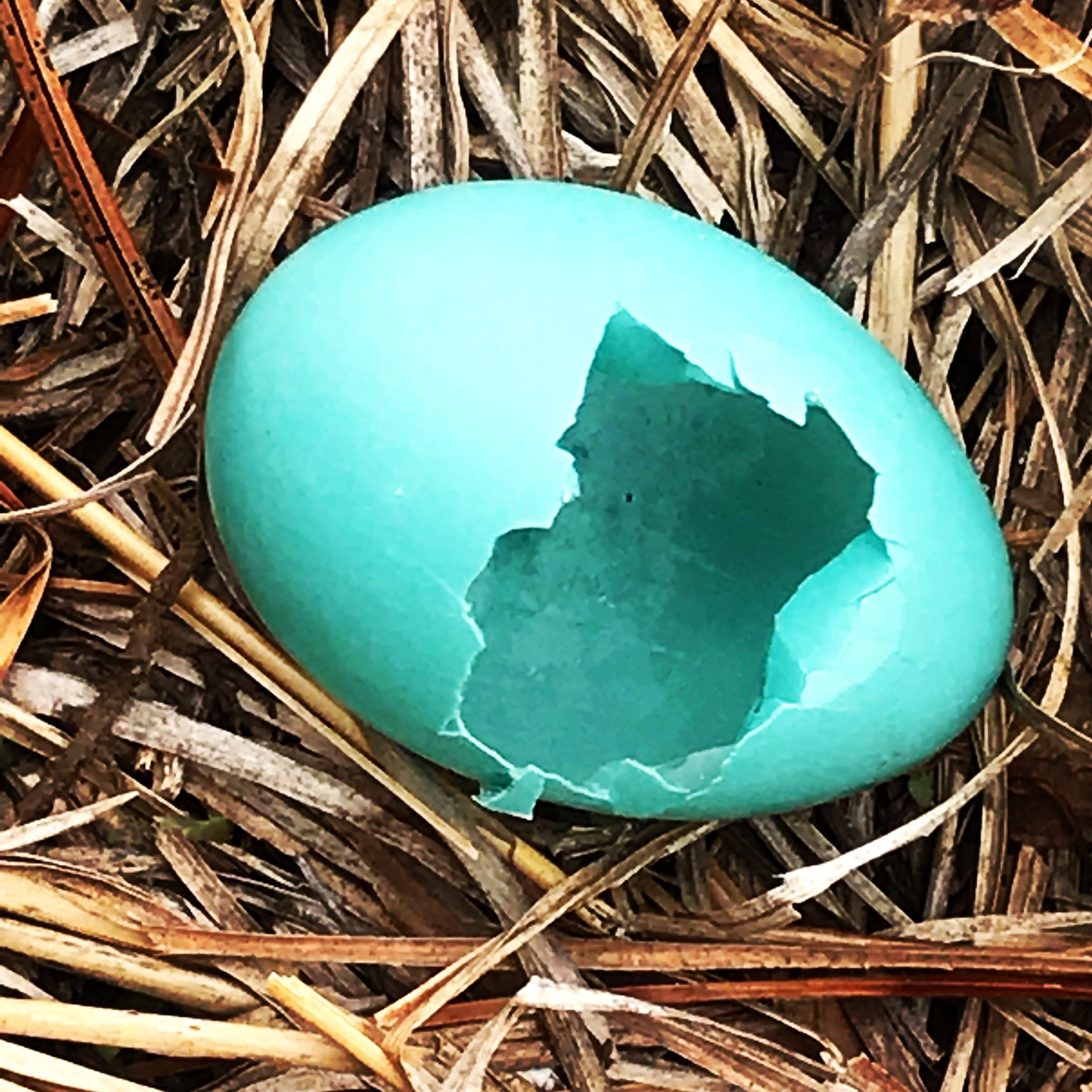 Broken egg found in the meadow