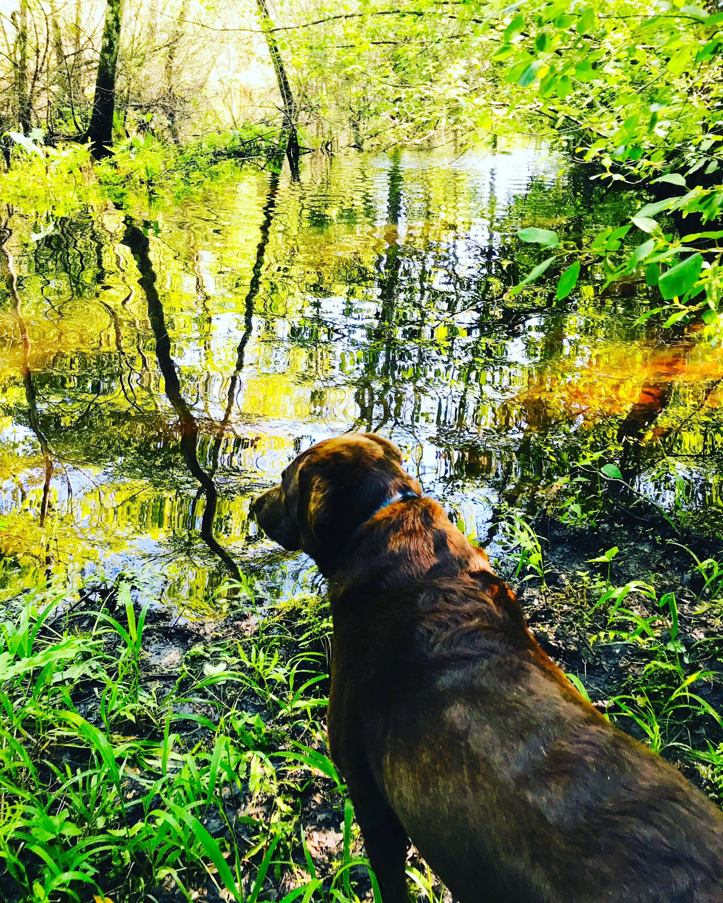 Charlie at the morning brook