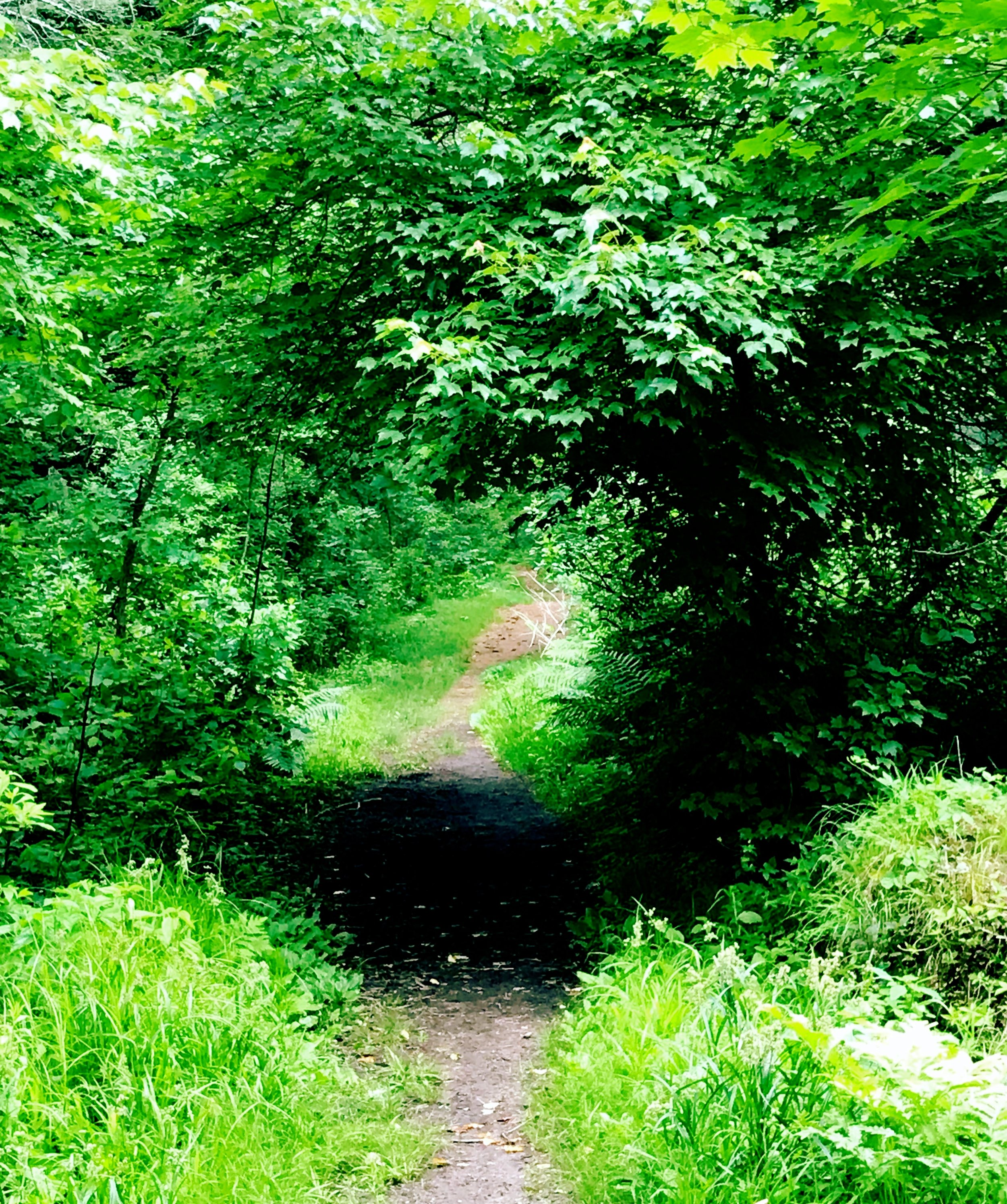 enchangting path.JPG