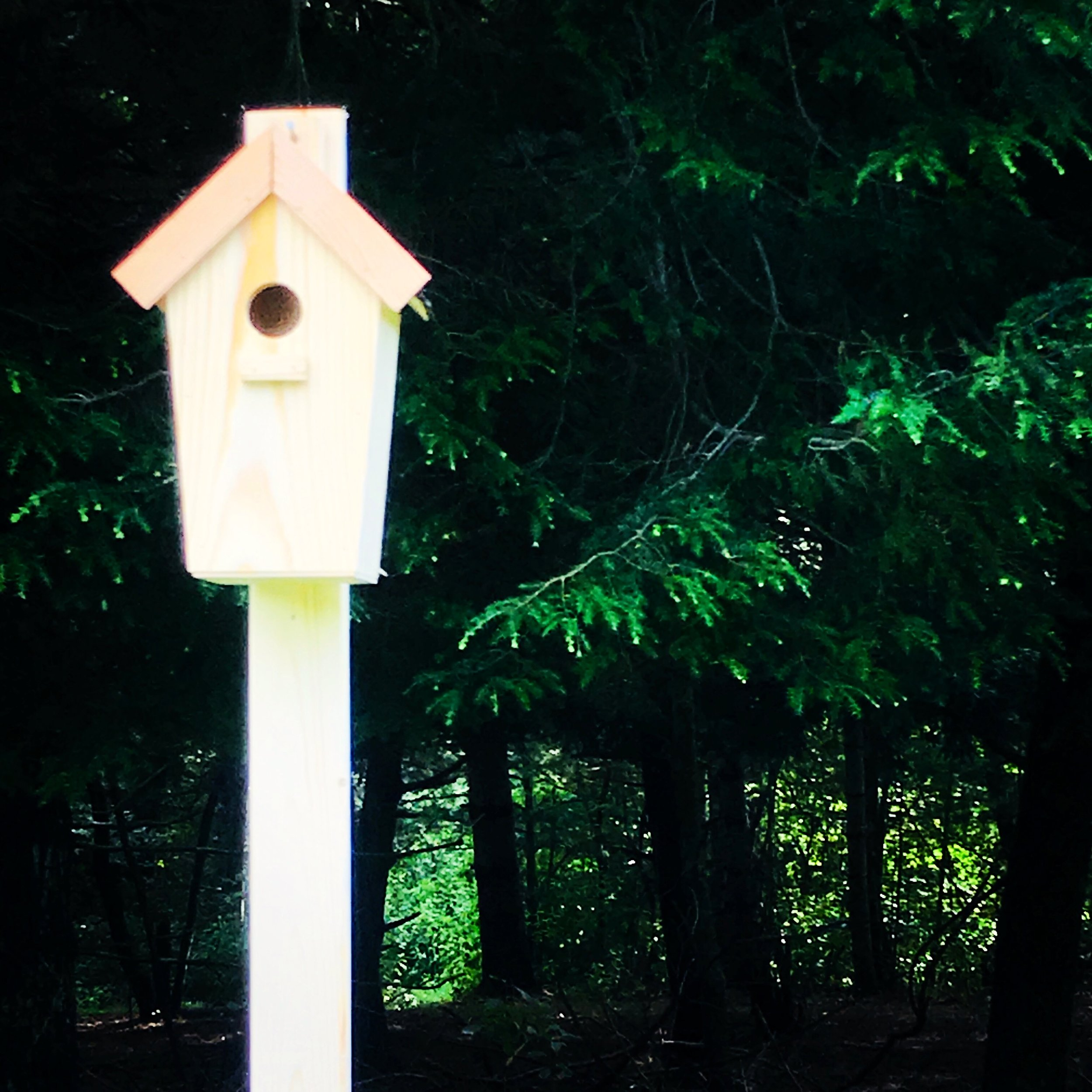 Our bird boxes are up