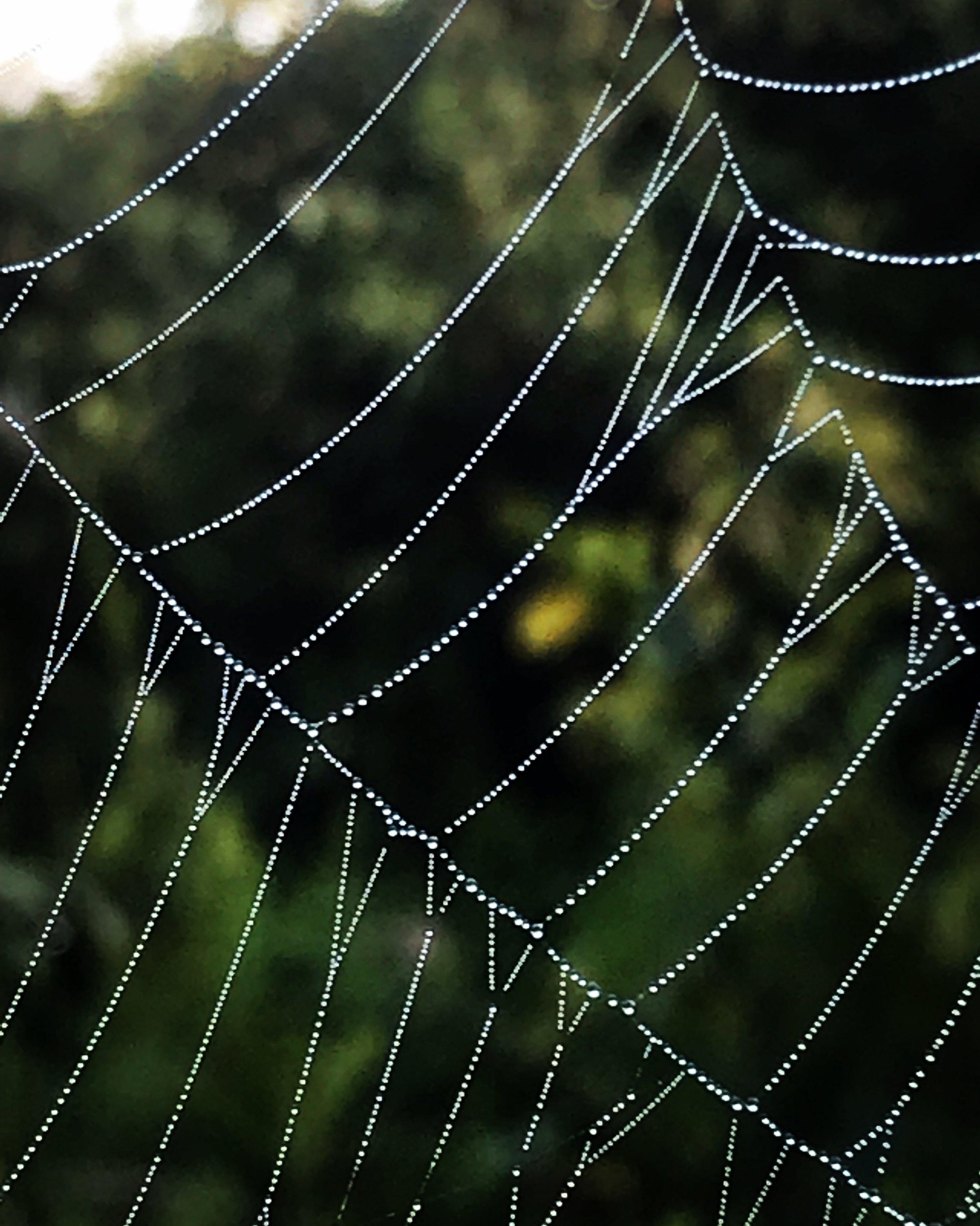 Morning web, Menemsha Hills