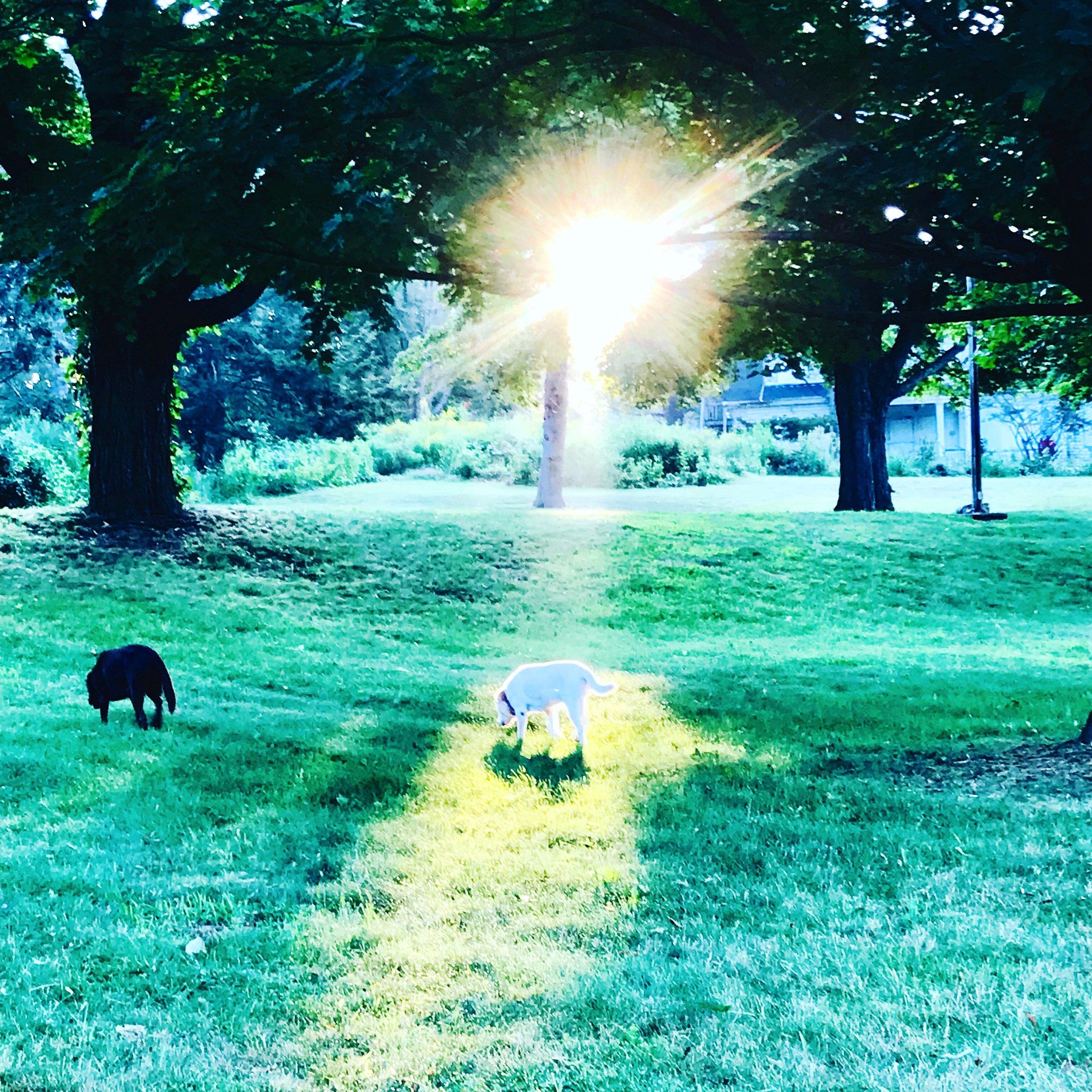 Suzi in the guiding light