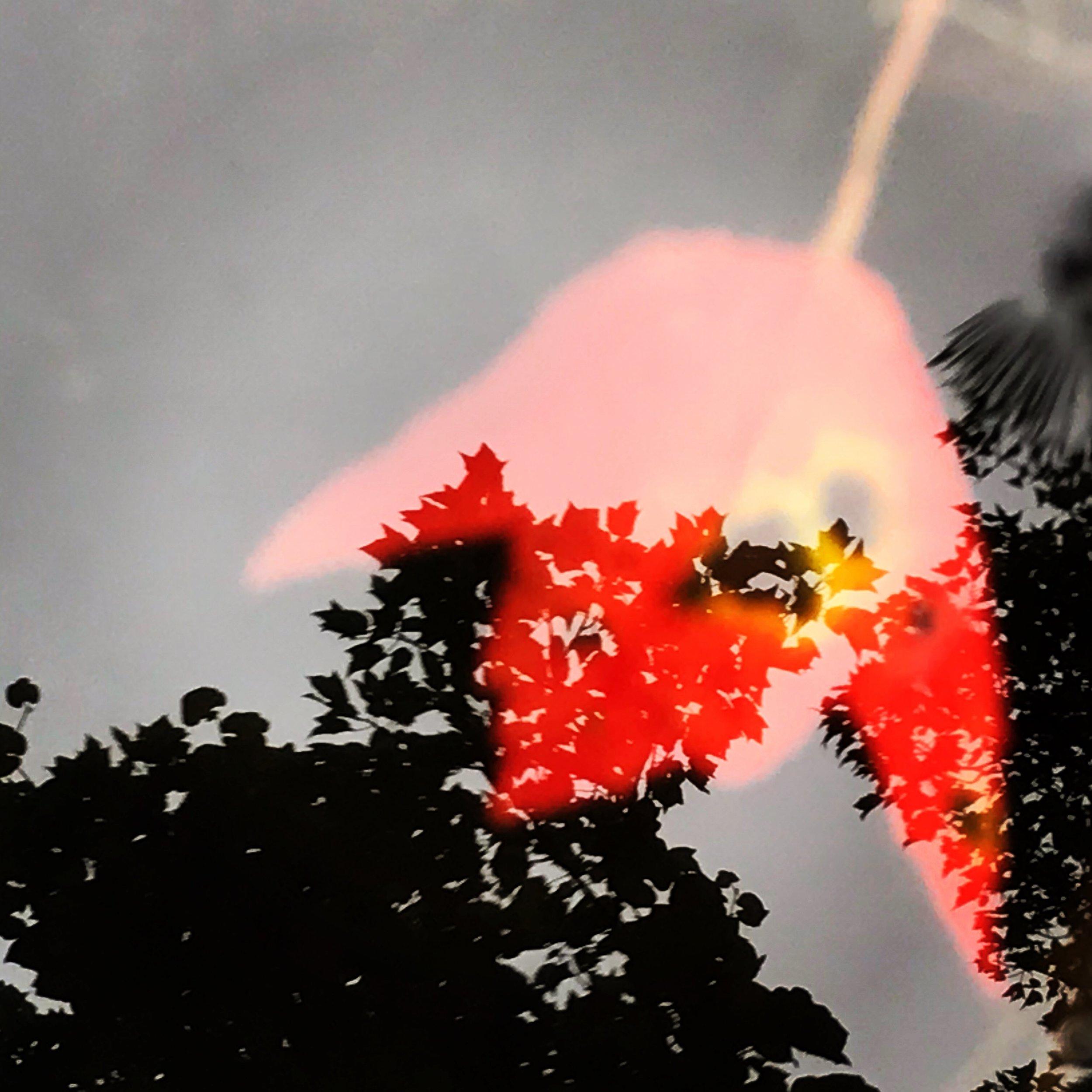 Red leaf, Charles River