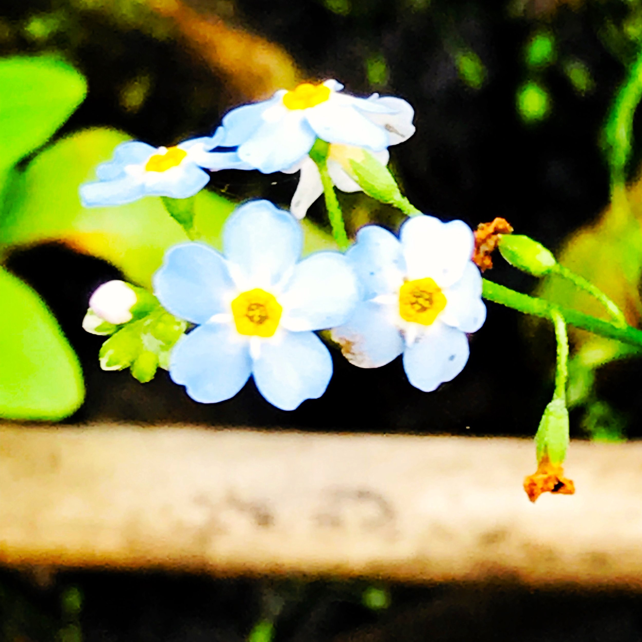 Forget Me Nots in the Swamp