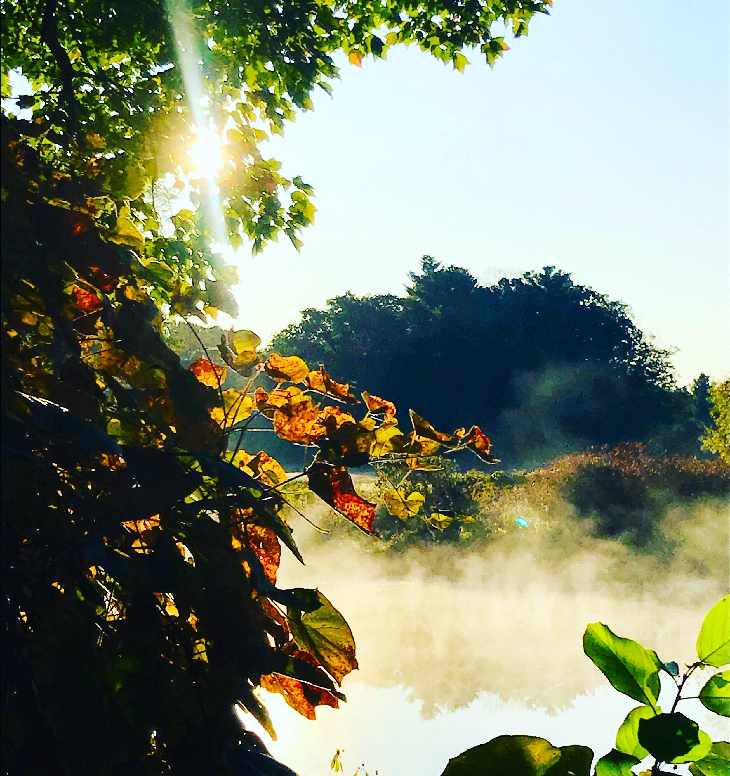Misty Charles River morning