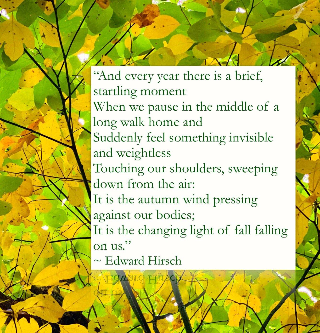 Edward Hirsch quote.jpg
