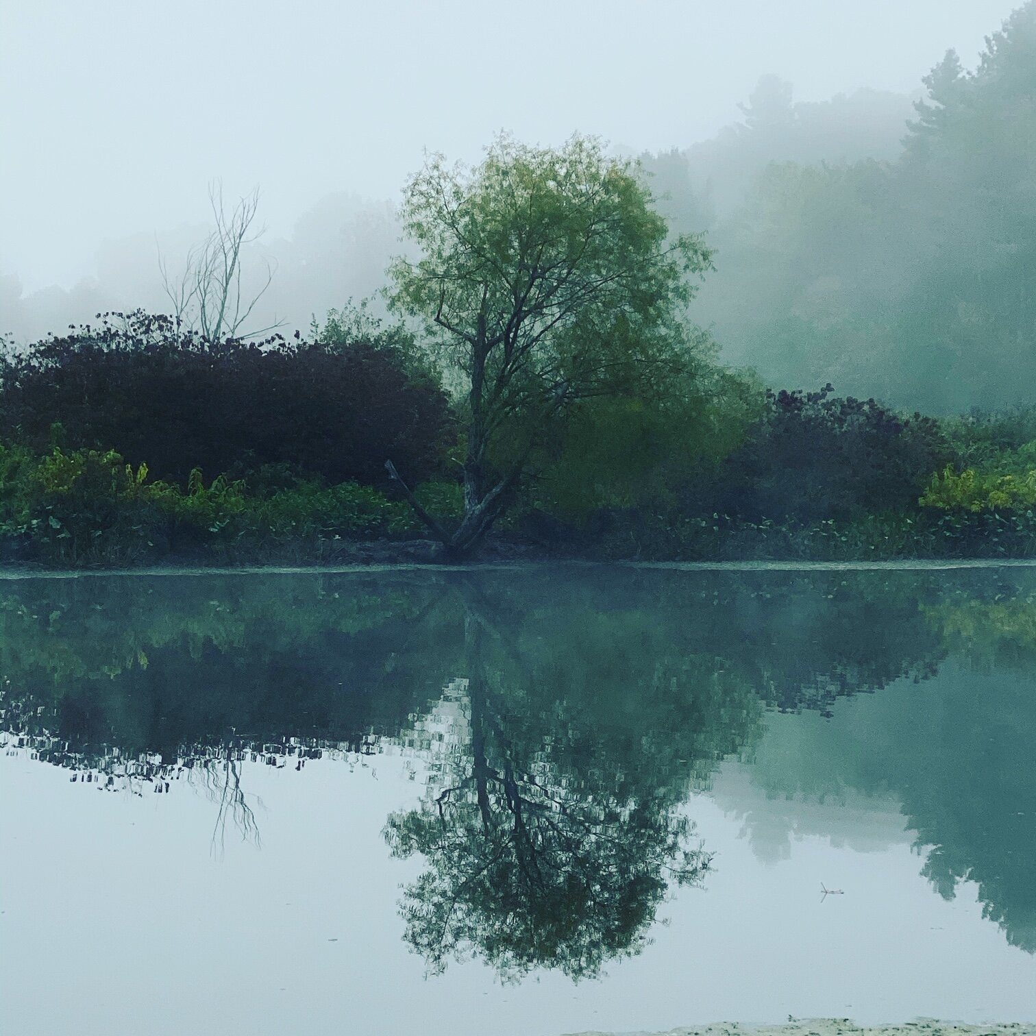 charles river morn.JPG