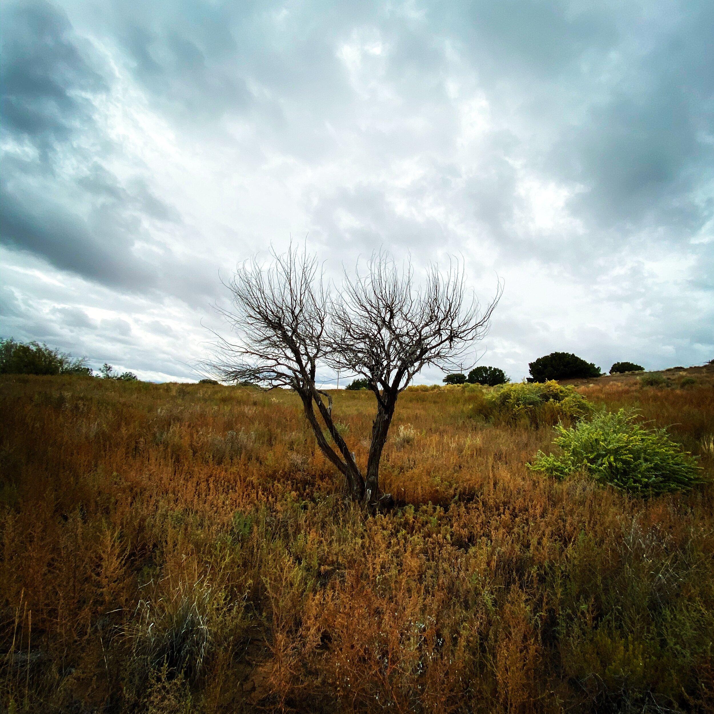 Cloudy Desert